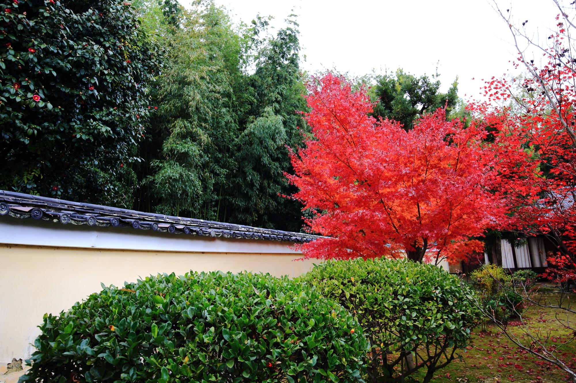もみじの穴場のろくおういんの鮮やかな見ごろの紅葉