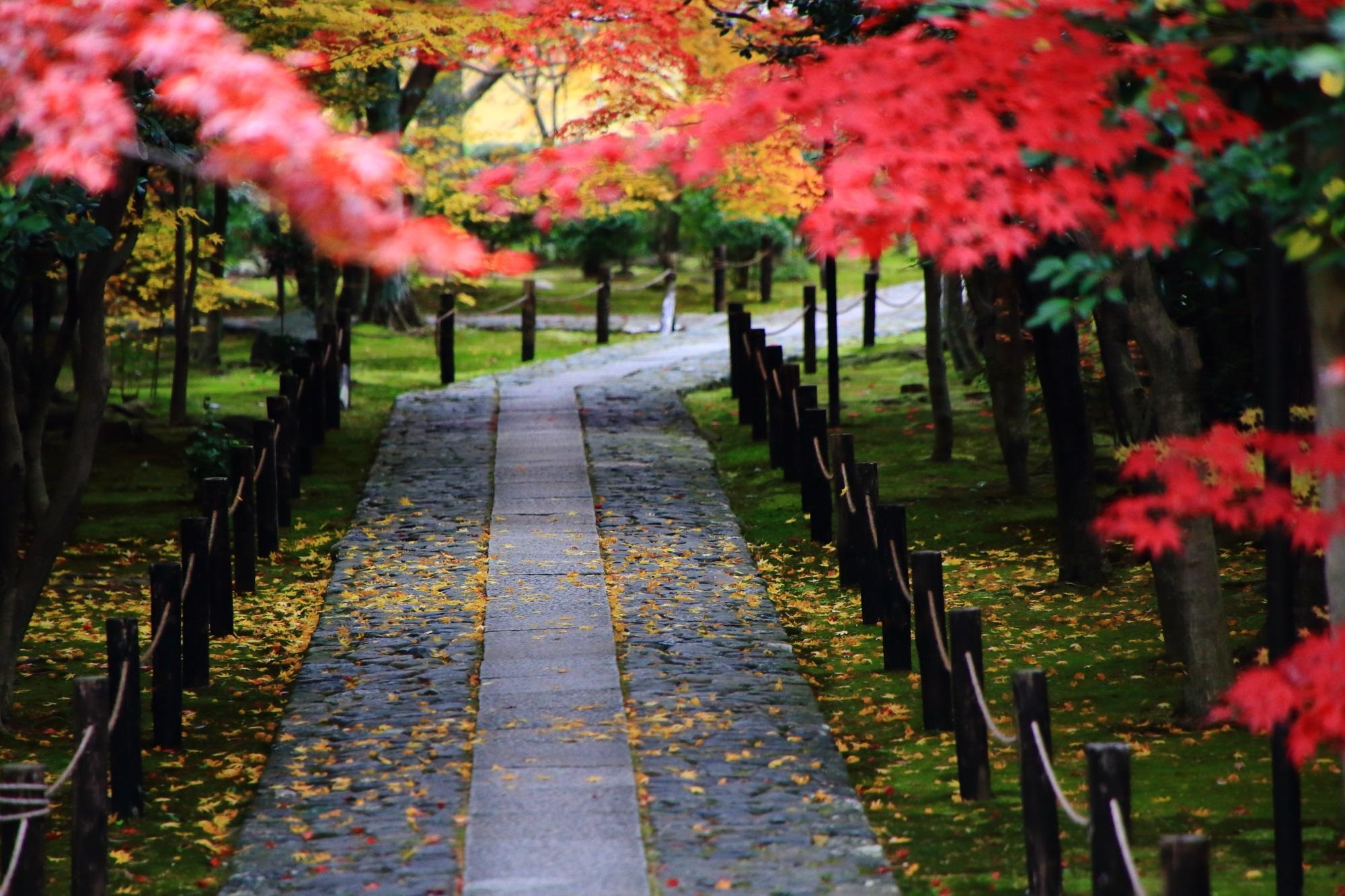嵐山の紅葉の穴場の鹿王院の優雅な散りもみじ