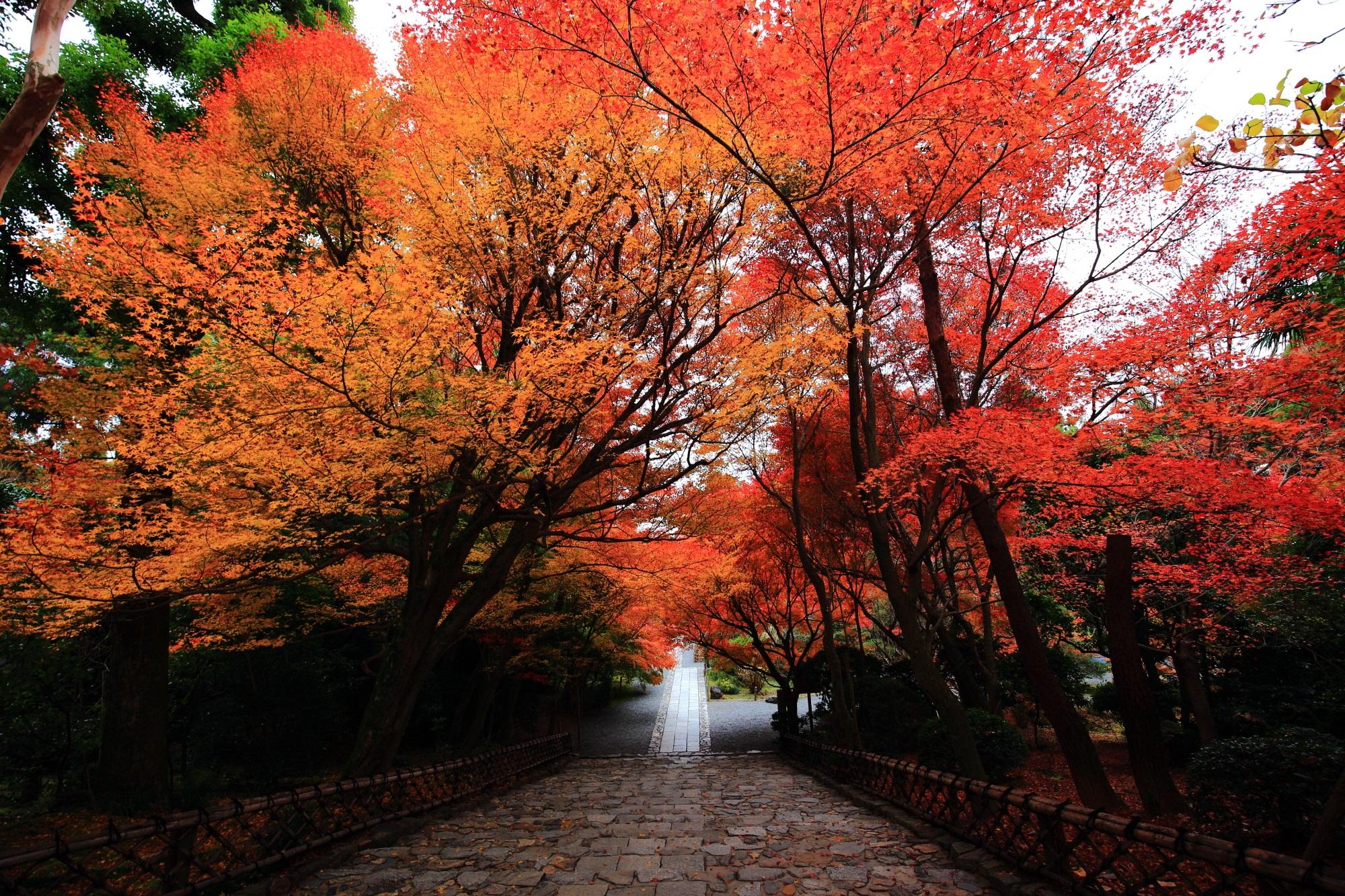 庫裡前の石段の上から眺めた美しい紅葉
