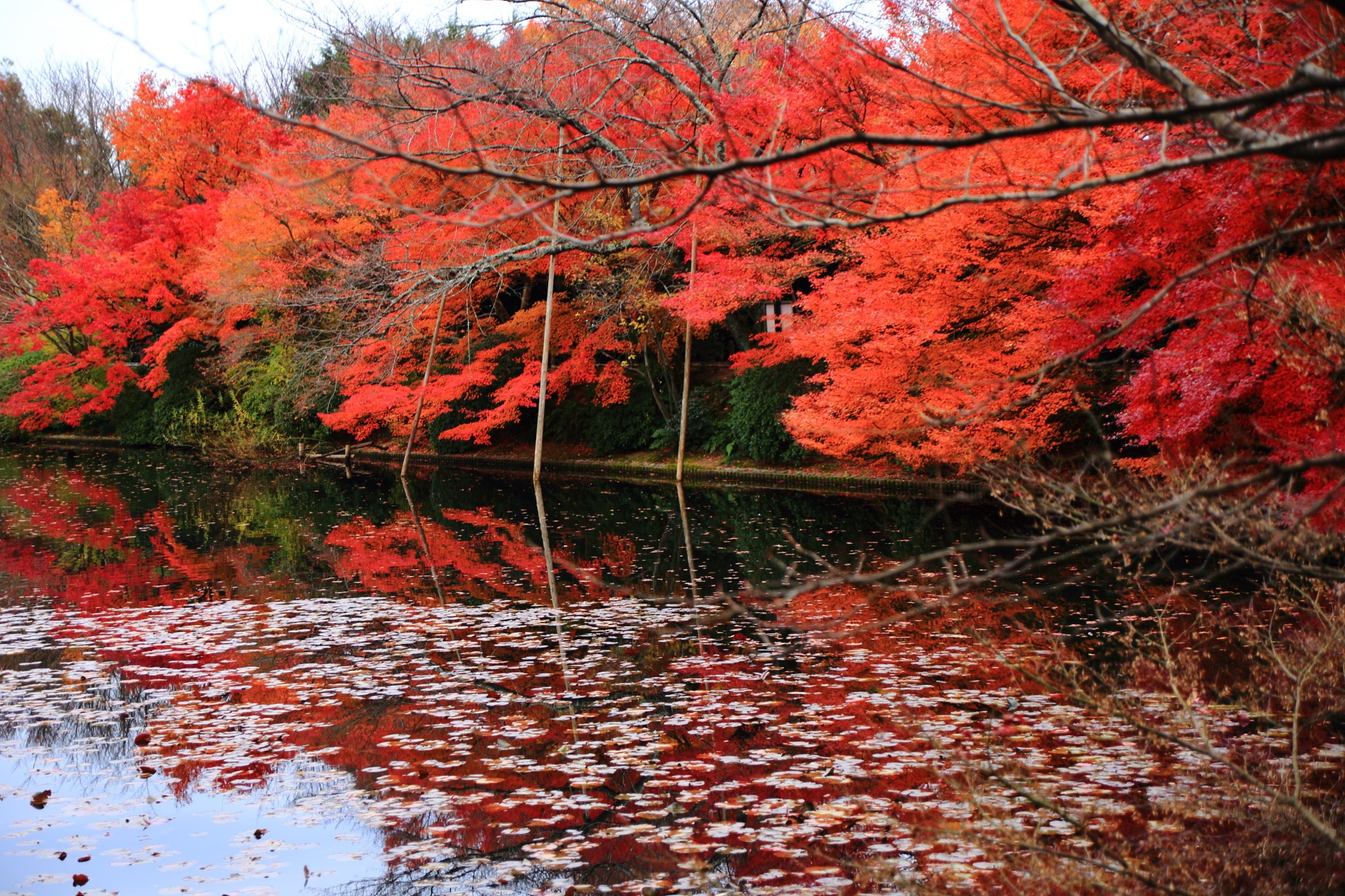 水面を覆う圧巻の紅葉