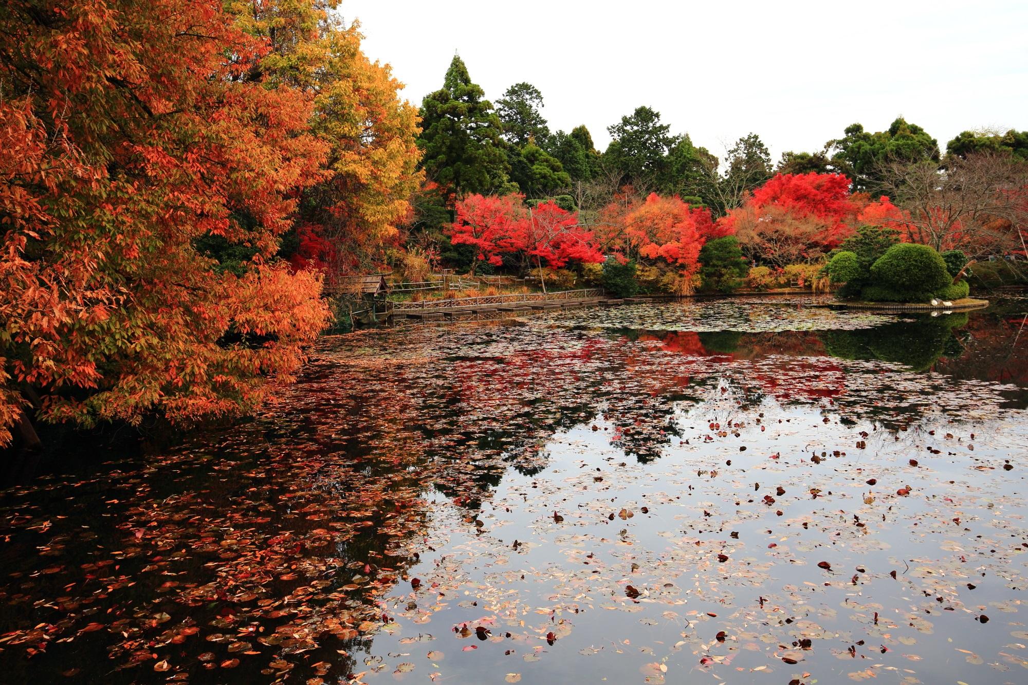 紅葉名所の龍安寺の鏡容池の散り紅葉と水鏡