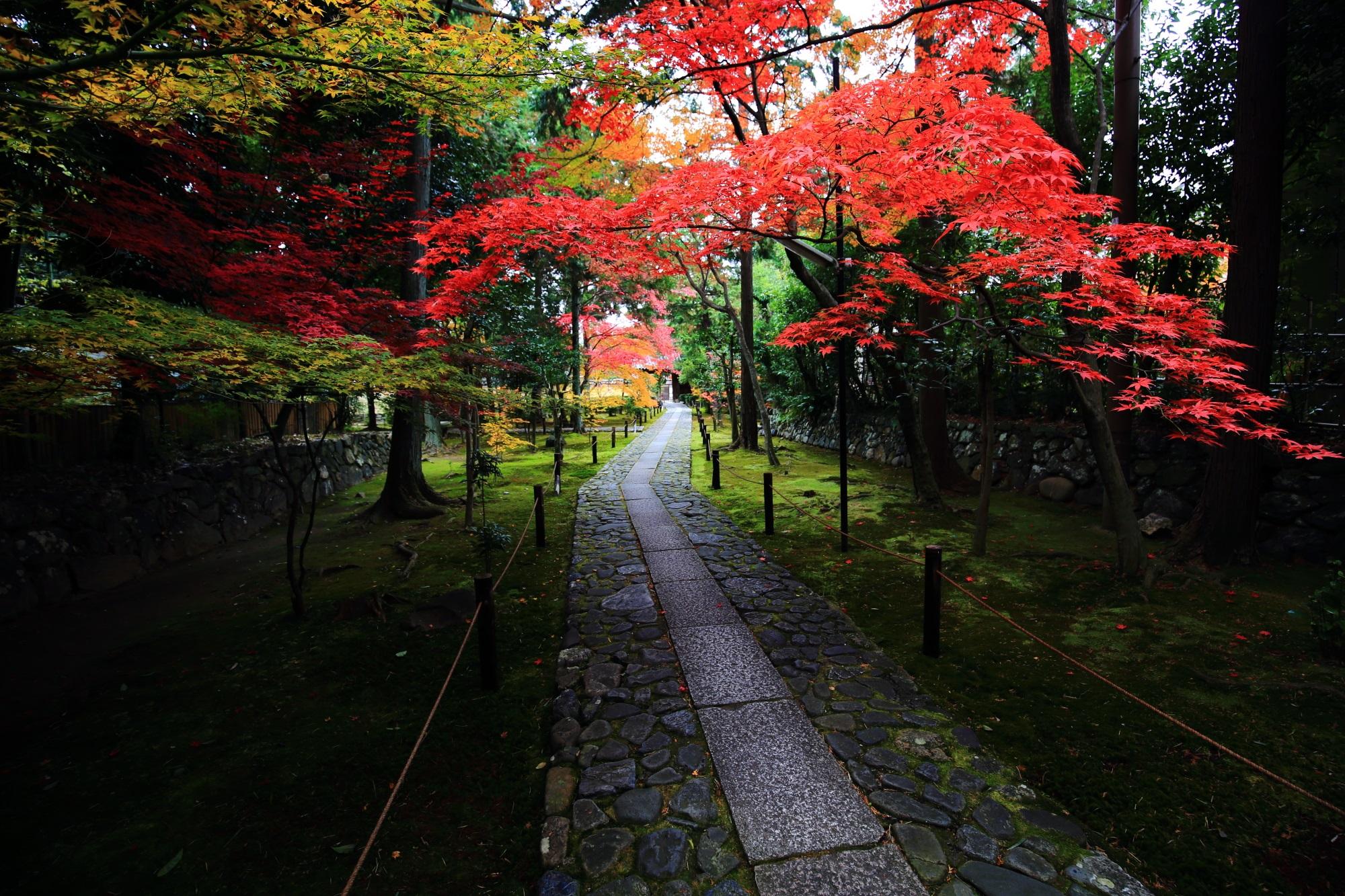 もみじの穴場の鹿王院の参道の見ごろの綺麗な紅葉