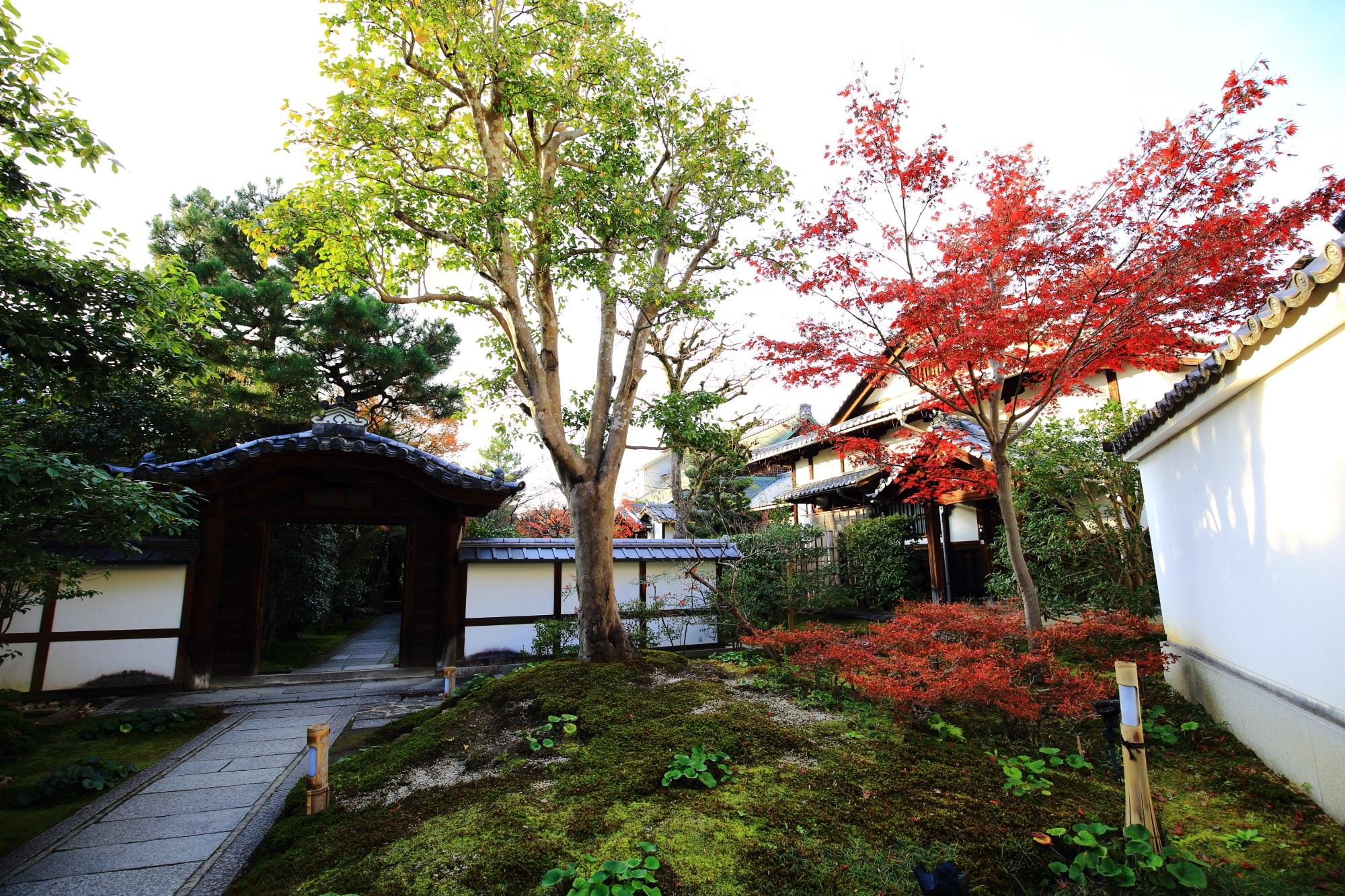 圓徳院の唐門と鮮やかな紅葉