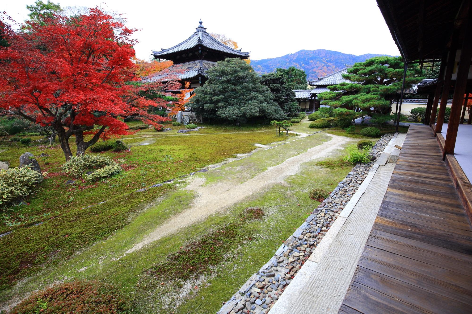 もみじの穴場の嵐山の鹿王院の舎利殿と優雅な見ごろの紅葉