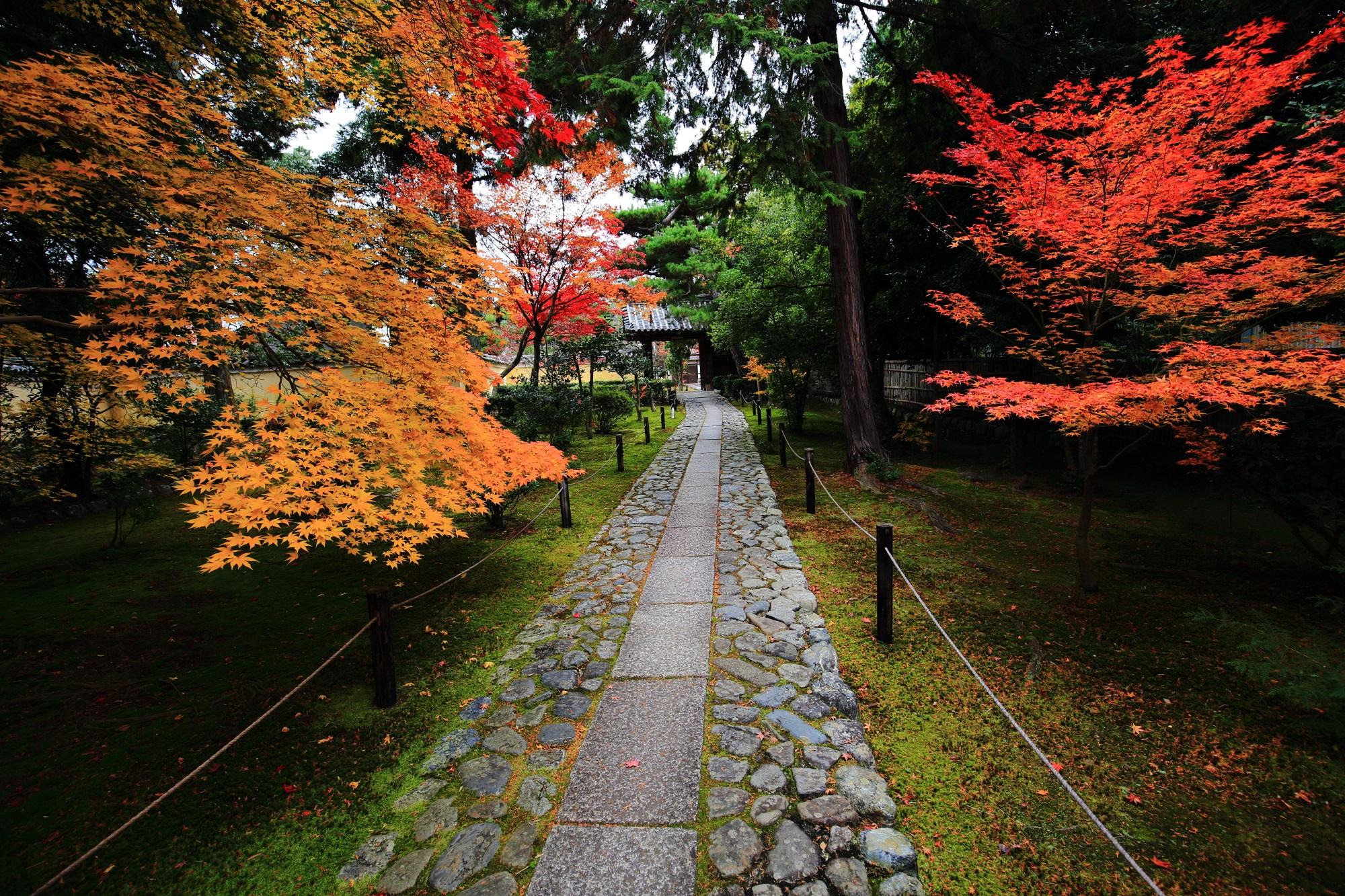 のもみじの名所の嵐山鹿王院の参道の優美な紅葉