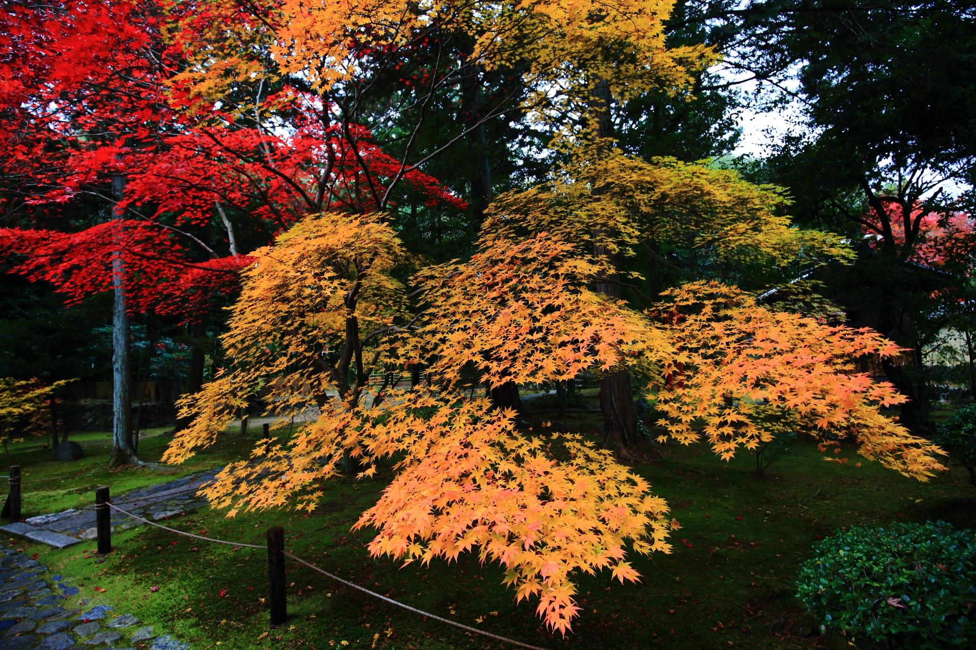 嵐山の鹿王院(ろくおういん)の参道の見ごろの紅葉