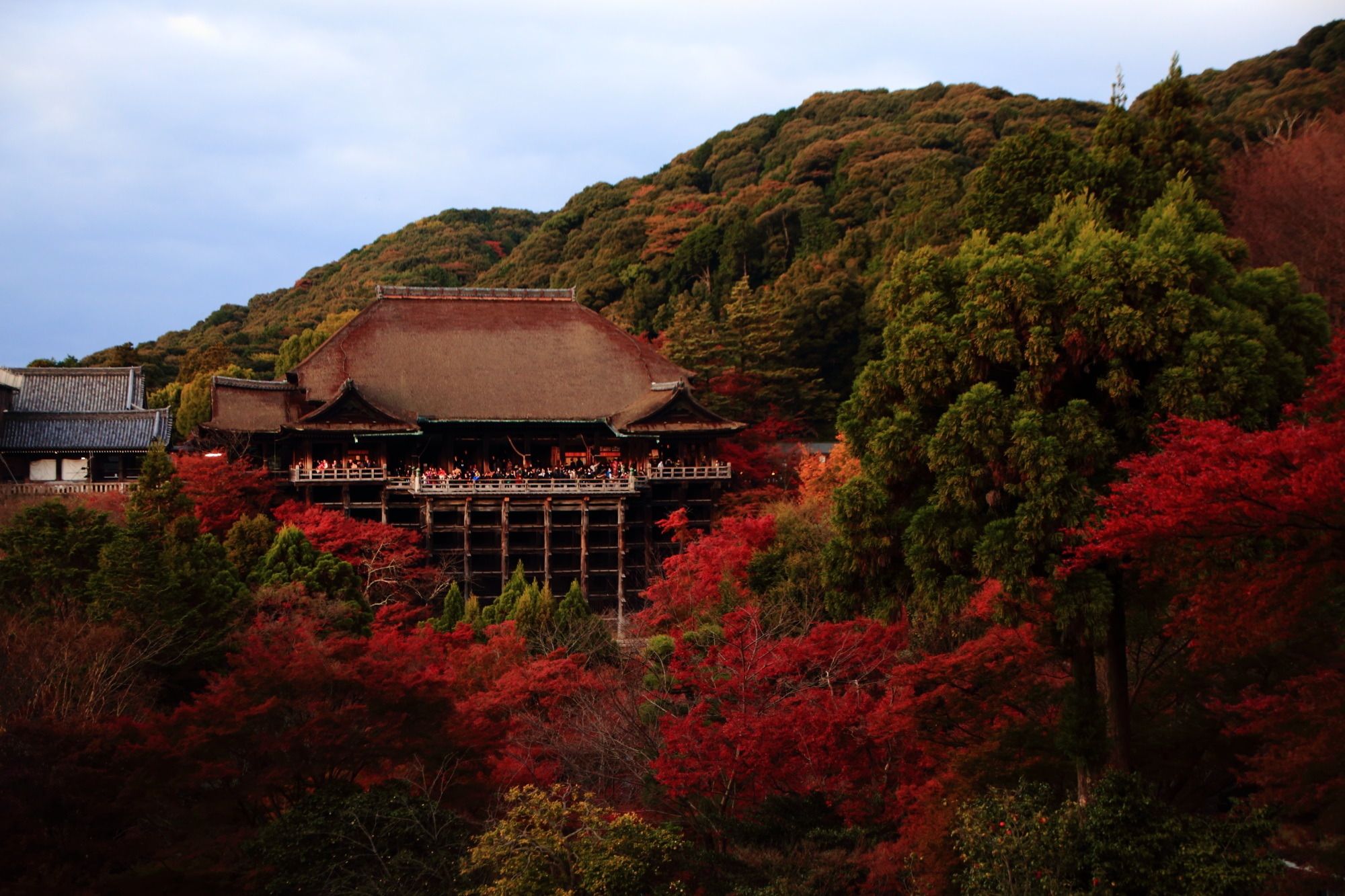 世界遺産の清水寺の清水の舞台と赤い見ごろの紅葉
