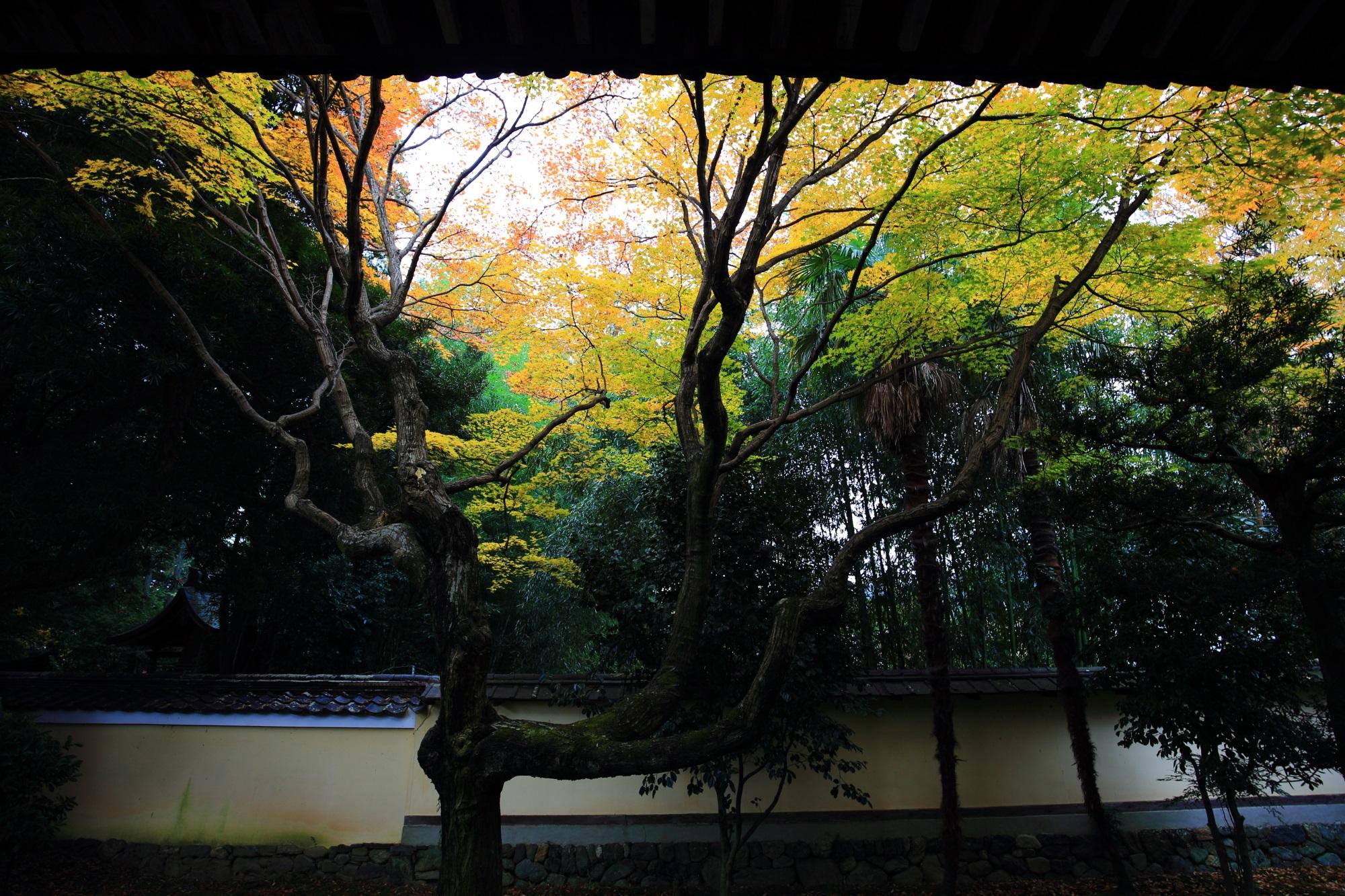 鹿王院の舎利殿裏の優美な紅葉