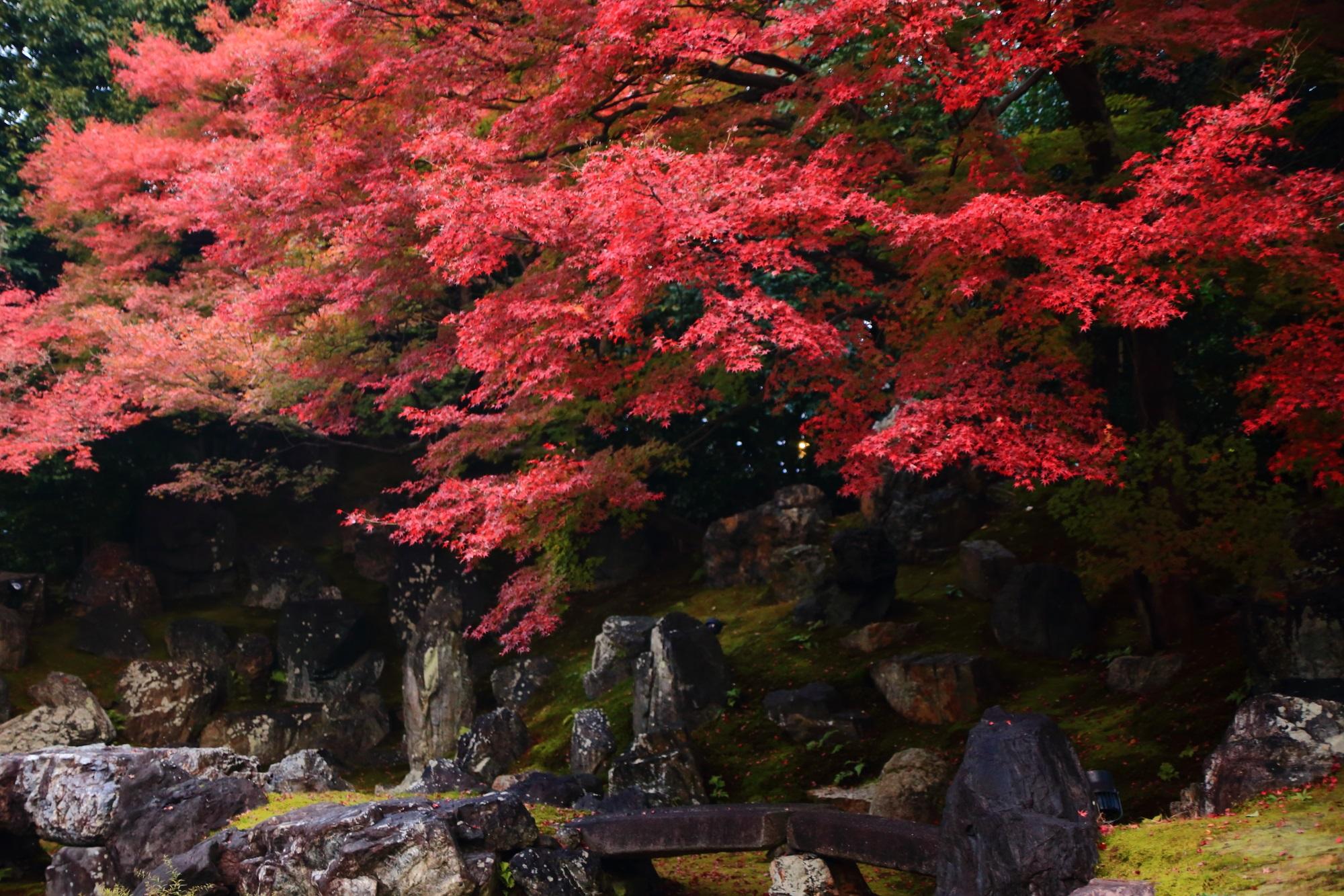 紅葉の名所の高台寺圓徳院の北庭の岩と見ごろのもみじ