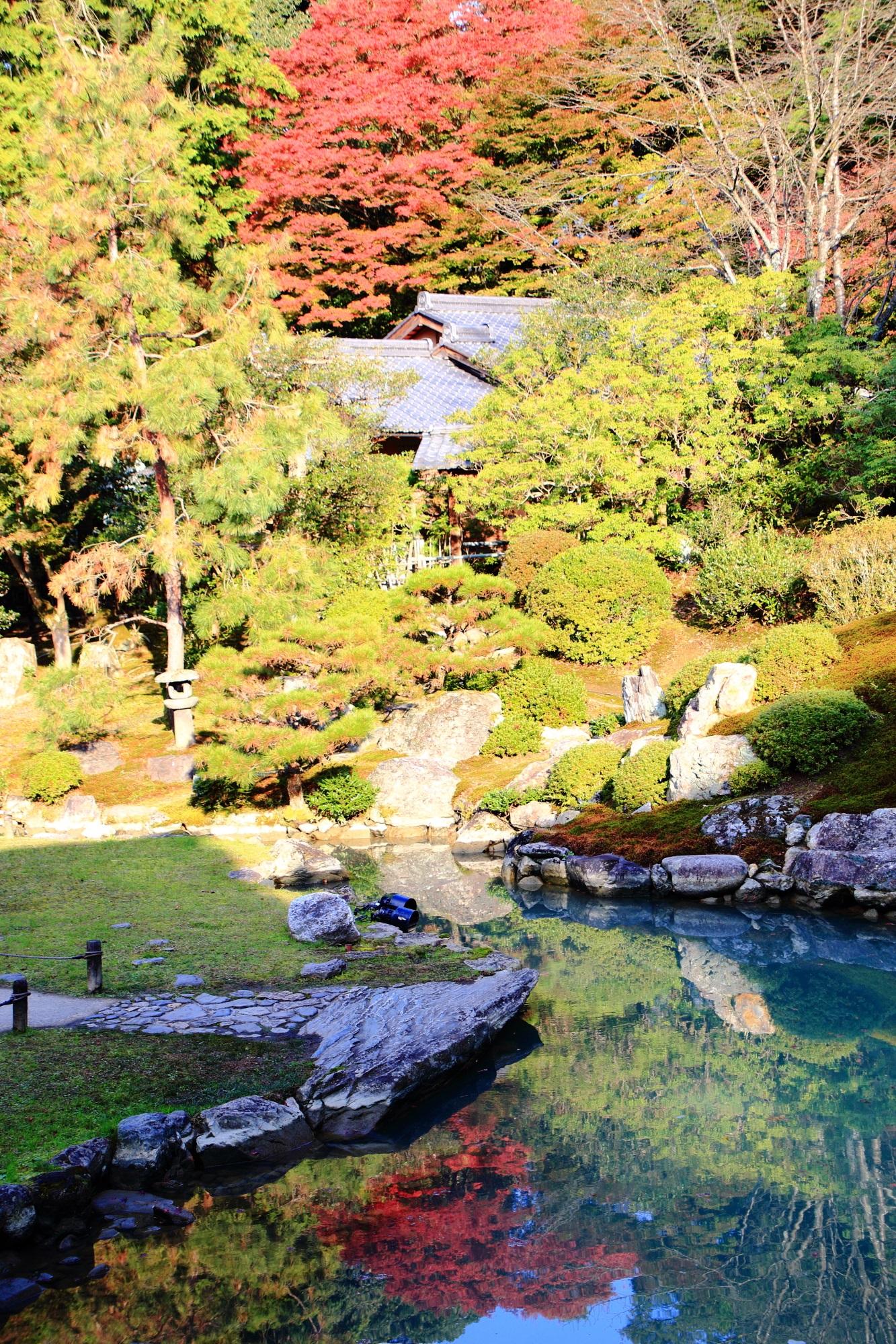 青蓮院の龍心池の優雅な紅葉