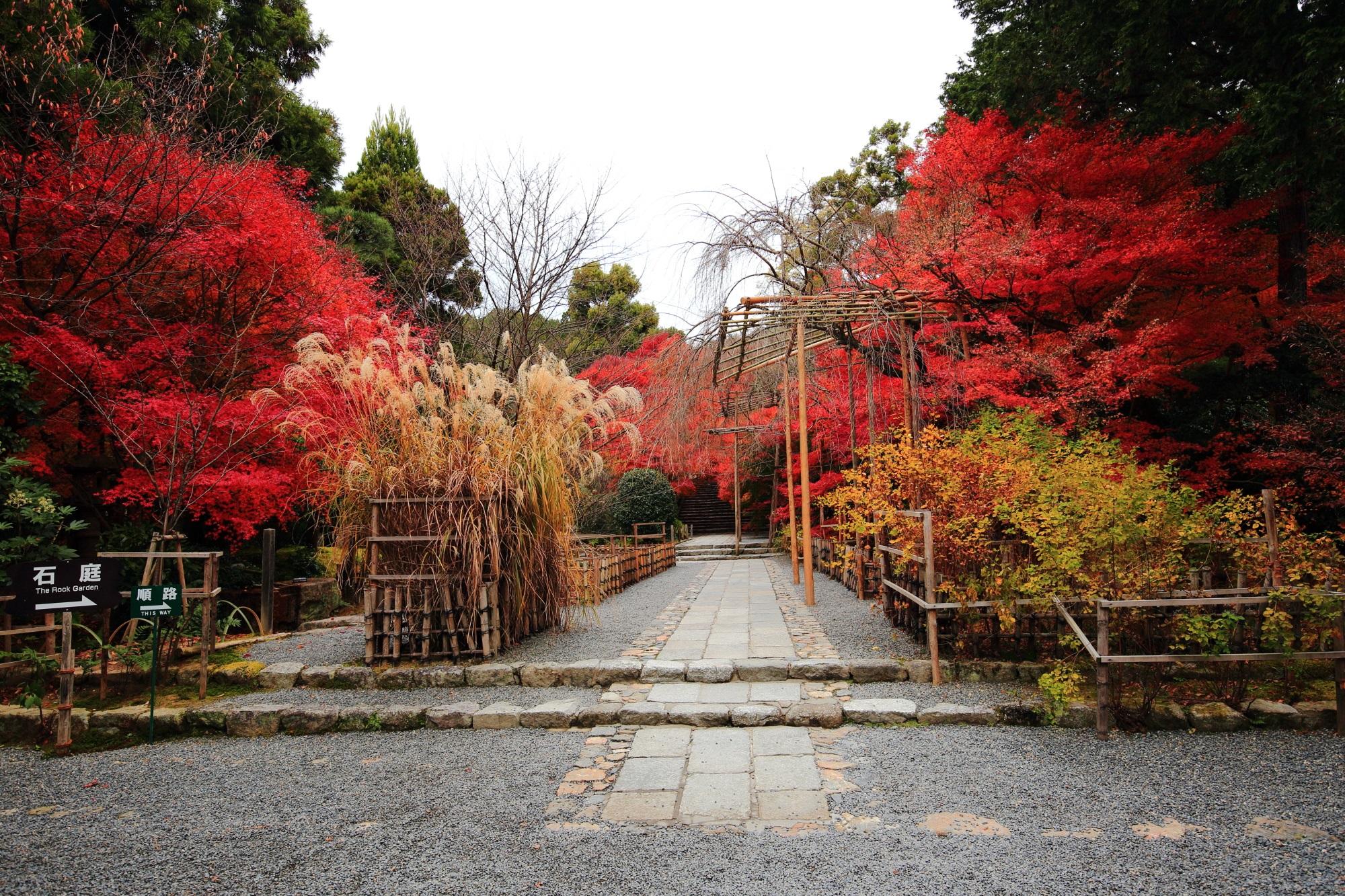 龍安寺の庫裡前の紅葉