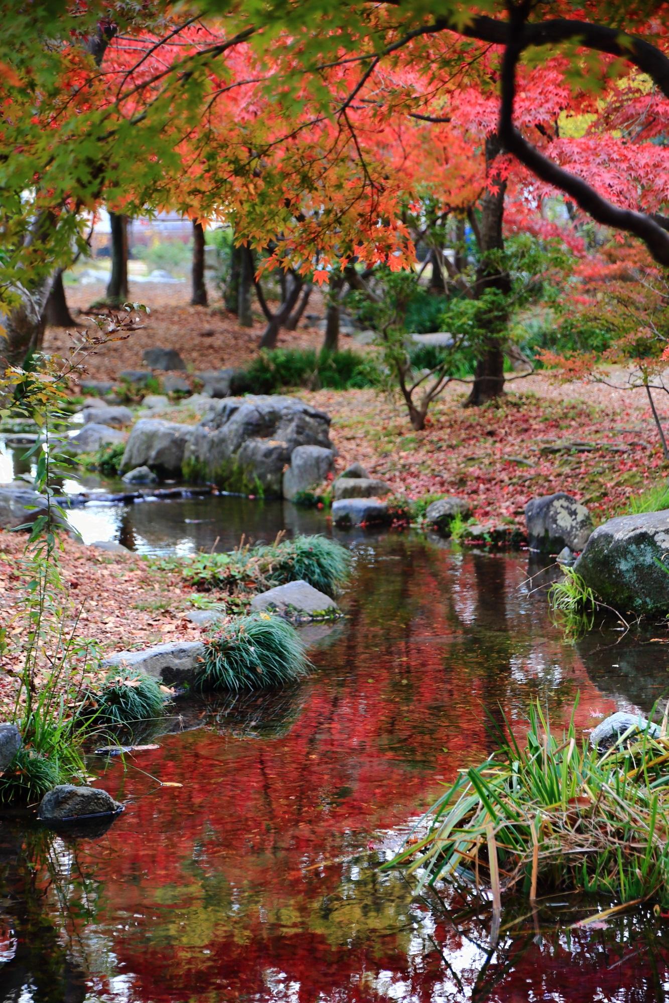 梅小路公園の優雅な紅葉と水鏡