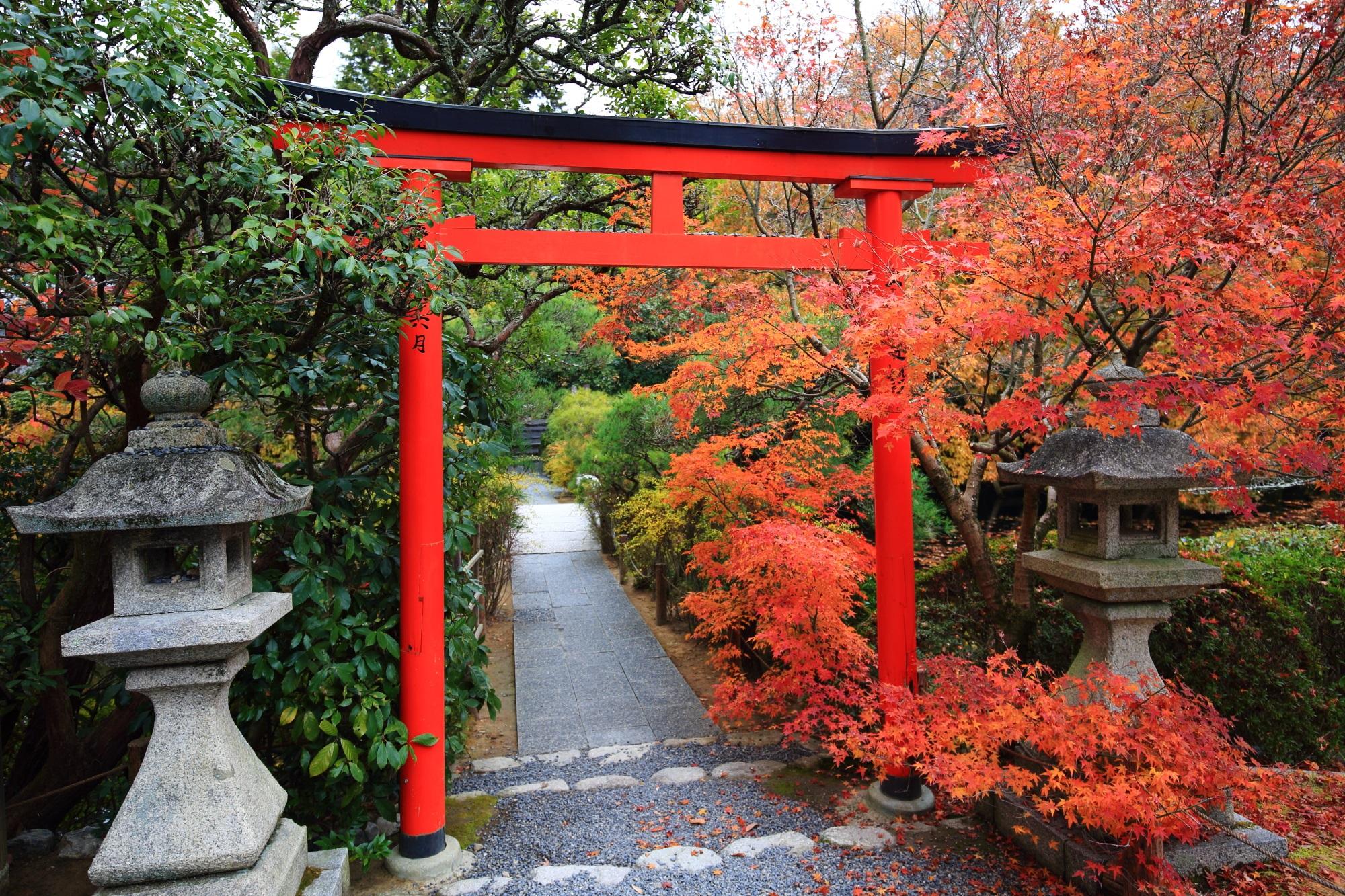 龍安寺の弁財天の鳥居と紅葉