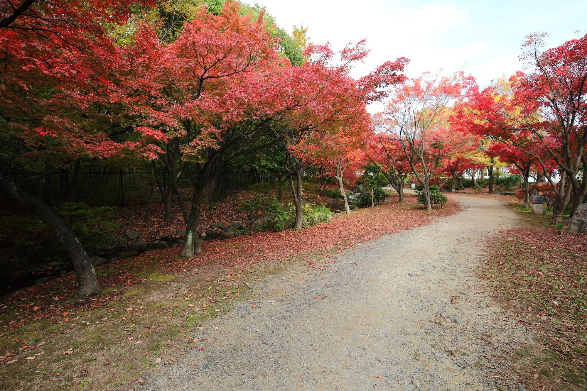 Kyoto Umekoji-Koen-Park 紅葉 見ごろ 秋