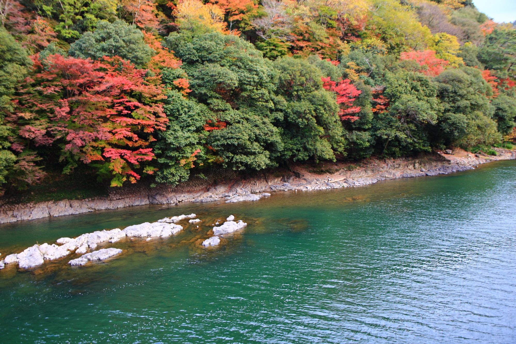 もみじの名所の宇治川の鮮やかな紅葉