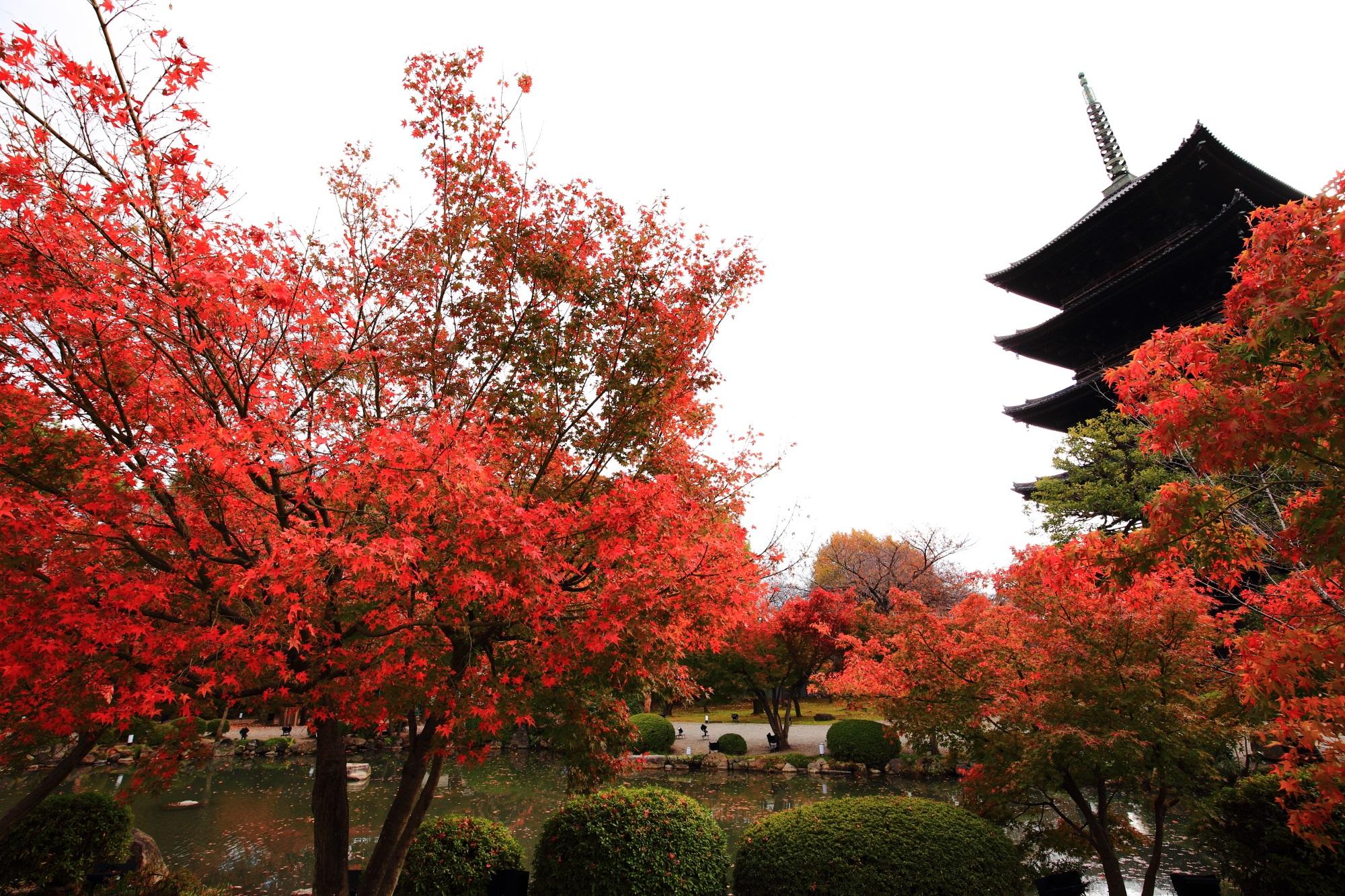 東寺(とうじ)の五重塔と瓢箪池と鮮やかな見ごろの紅葉