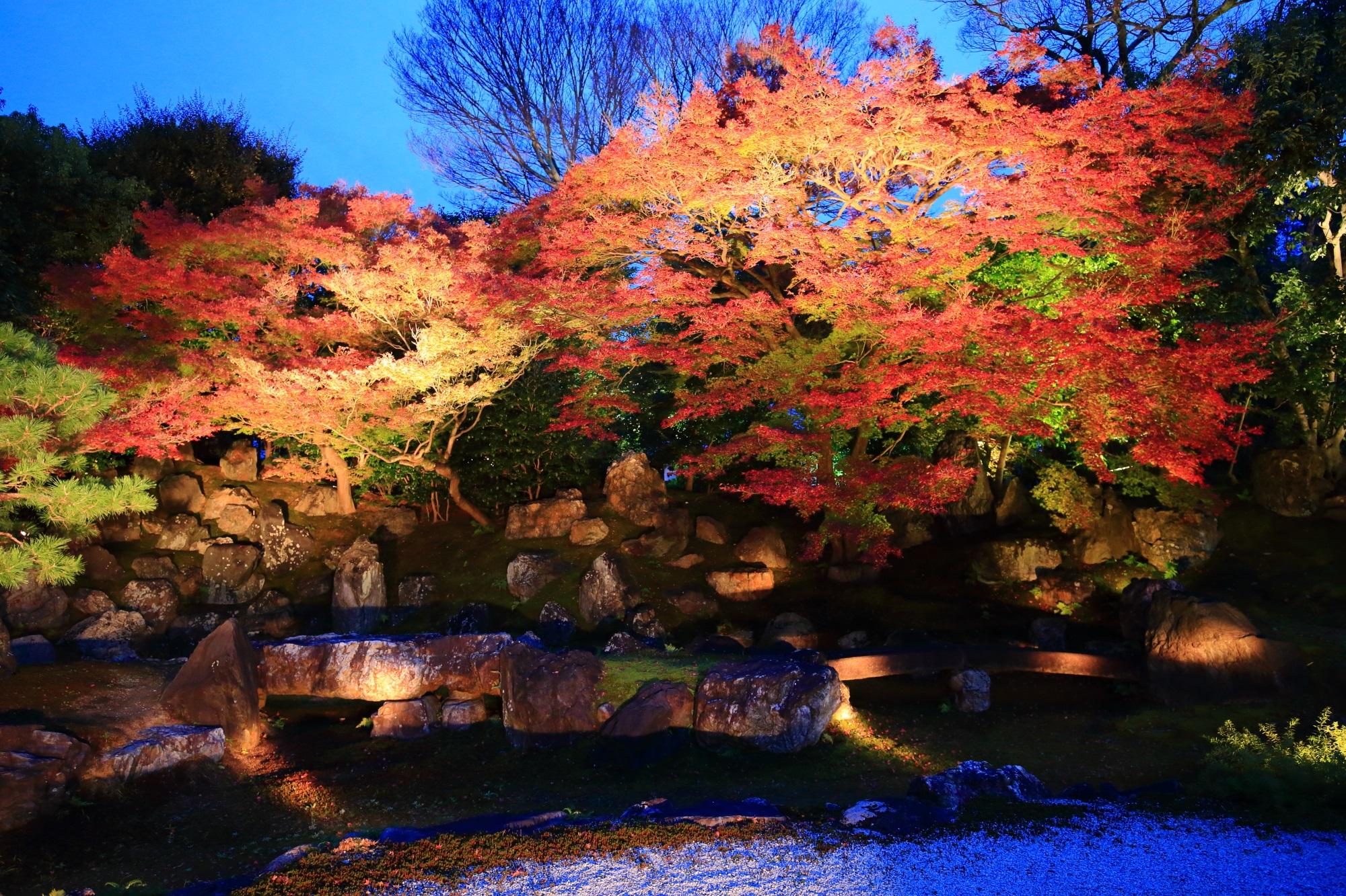 高台寺 圓徳院の北庭の見ごろの紅葉のライトアップ