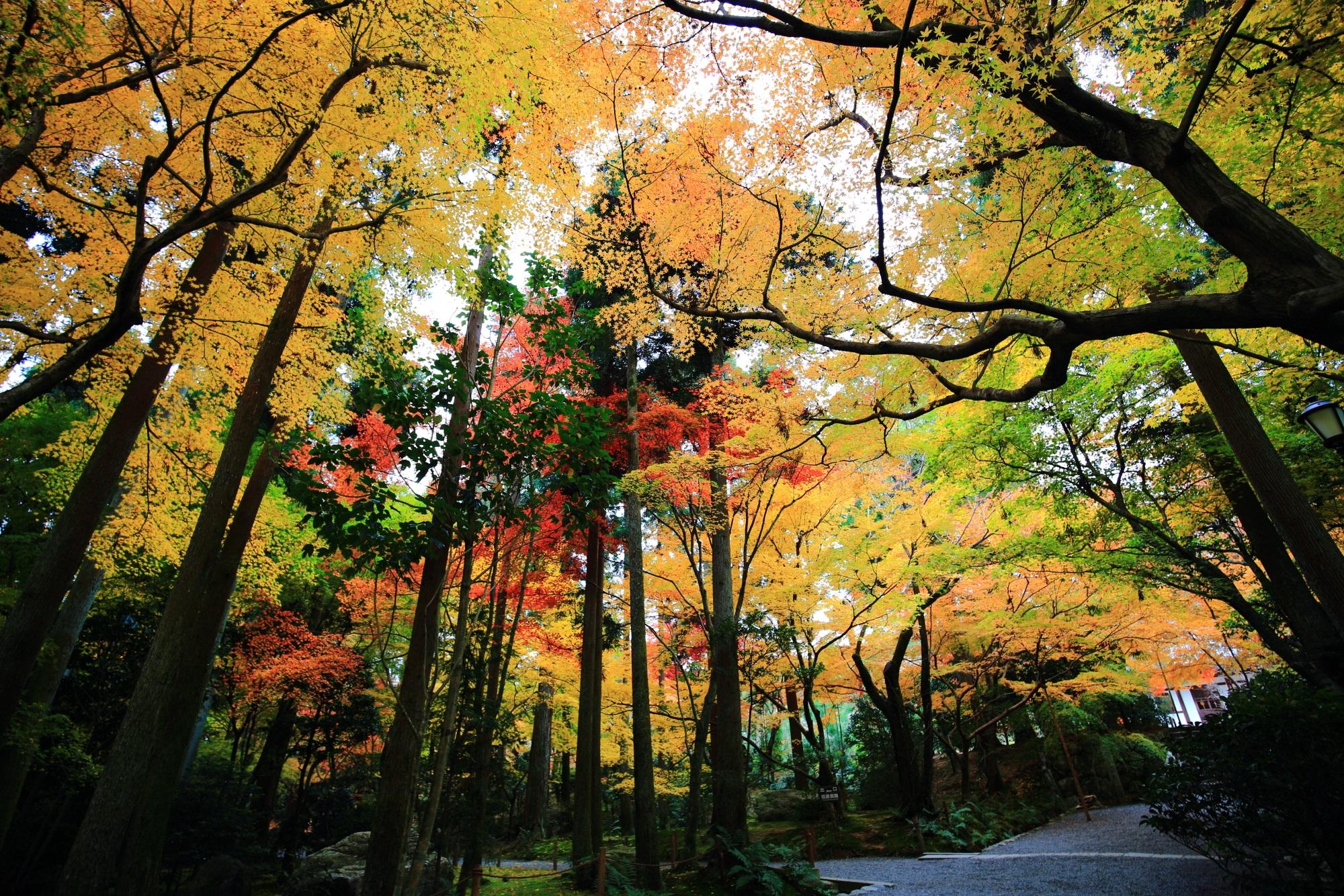 龍安寺の納骨堂前の参道の紅葉