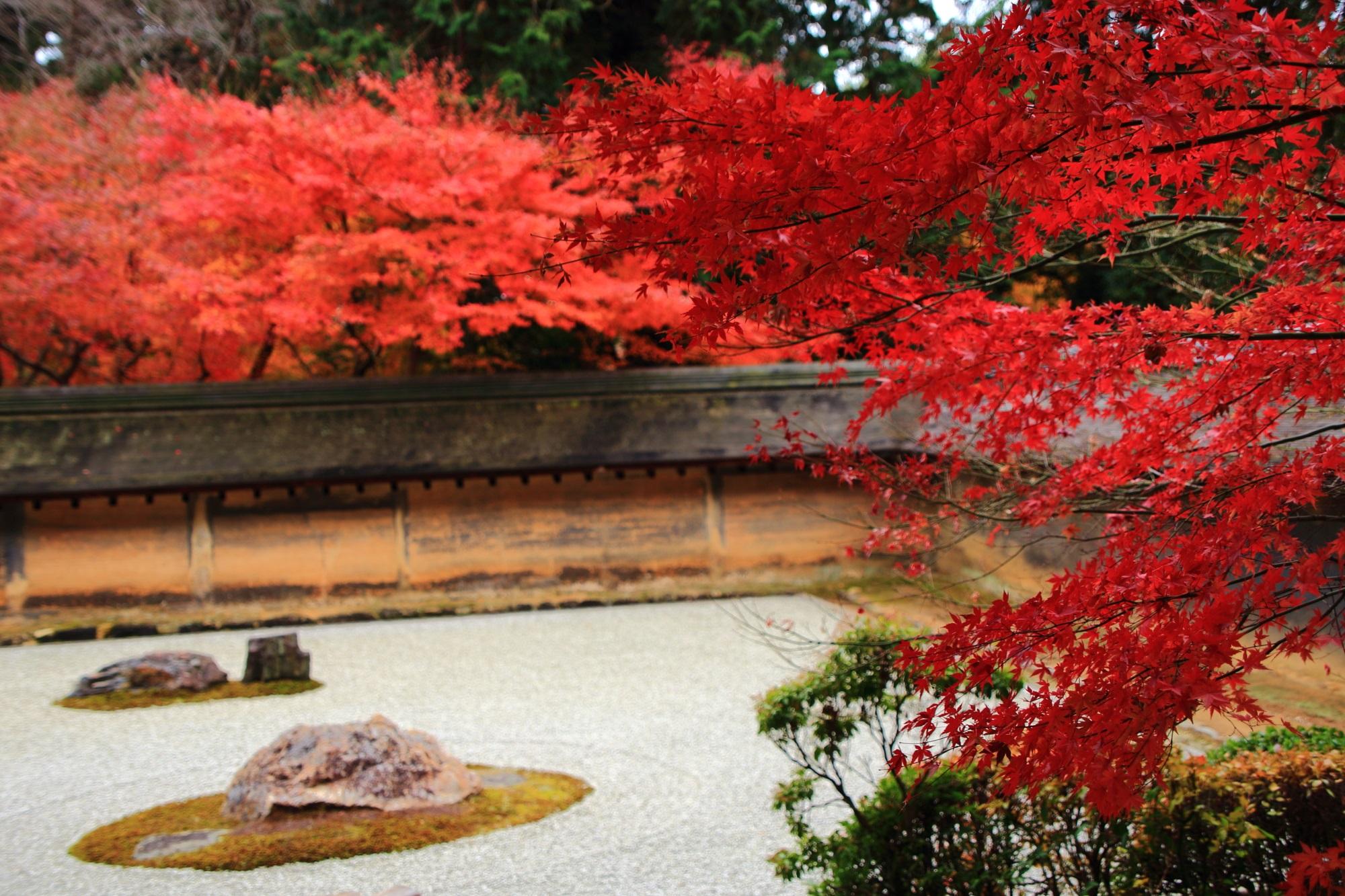 満遍なく綺麗に色づく龍安寺の紅葉
