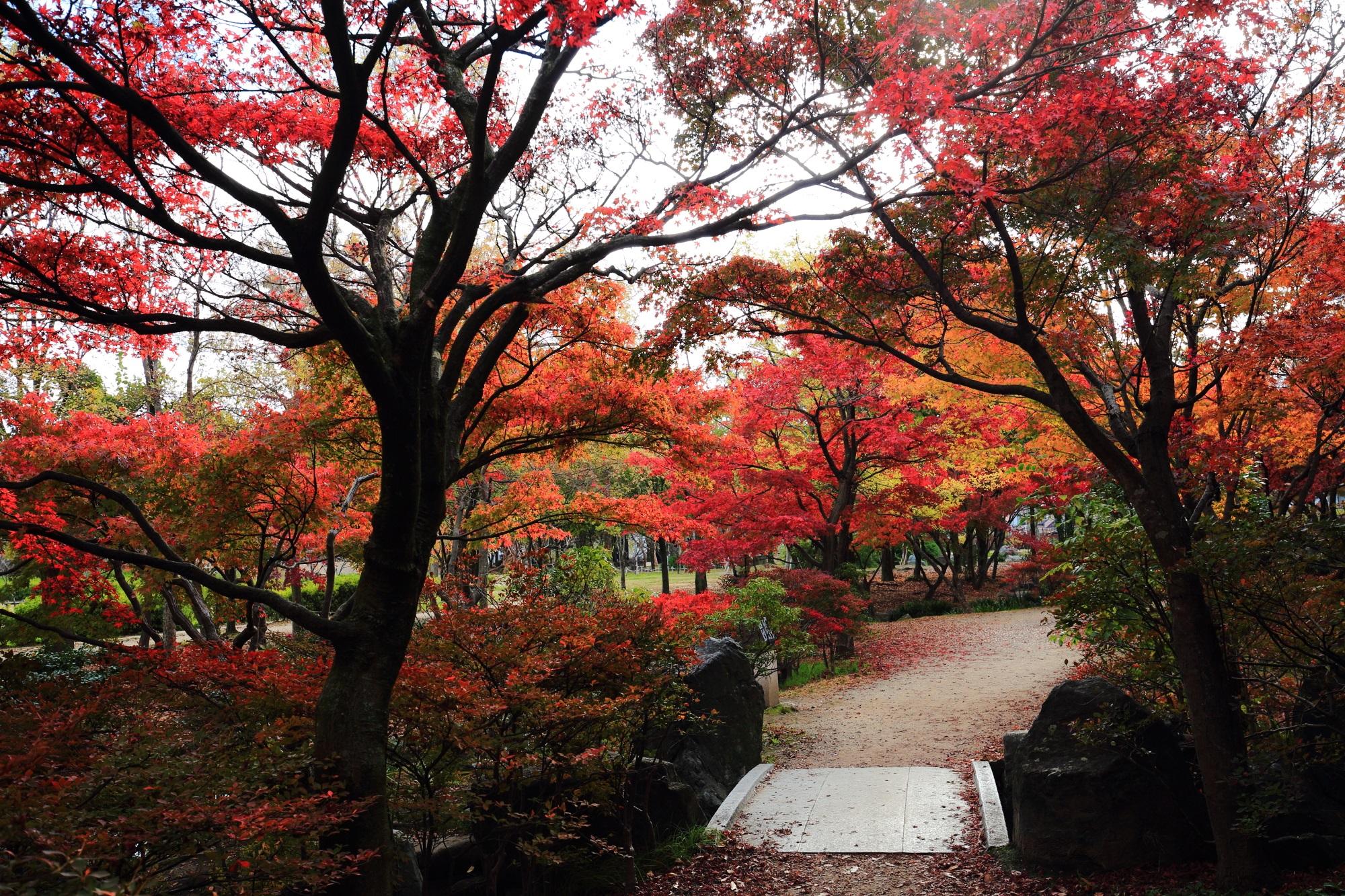 見ごろの紅葉につつまれた梅小路公園(うめこうじこうえん)