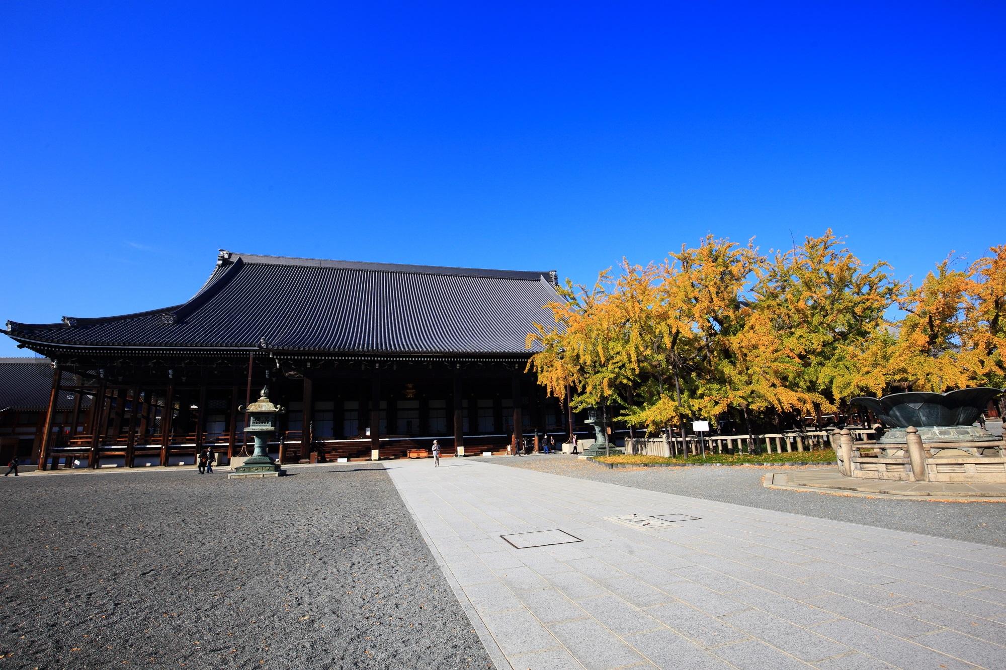 銀杏の名所の西本願寺の御影堂と逆さ銀杏