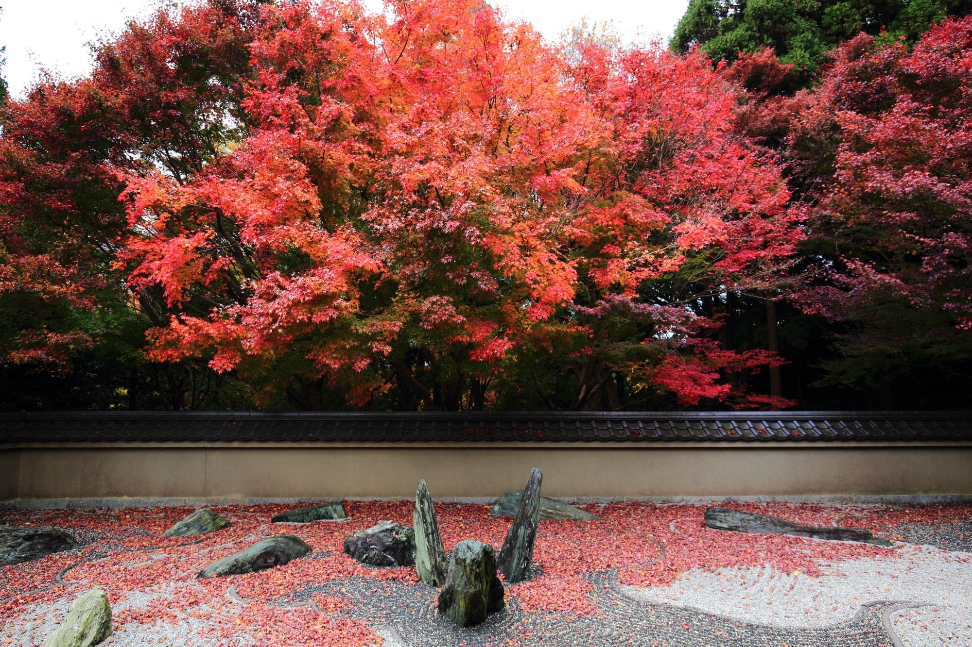 りょうぎんあんの見ごろの鮮やかな紅葉と浮かび上がる龍
