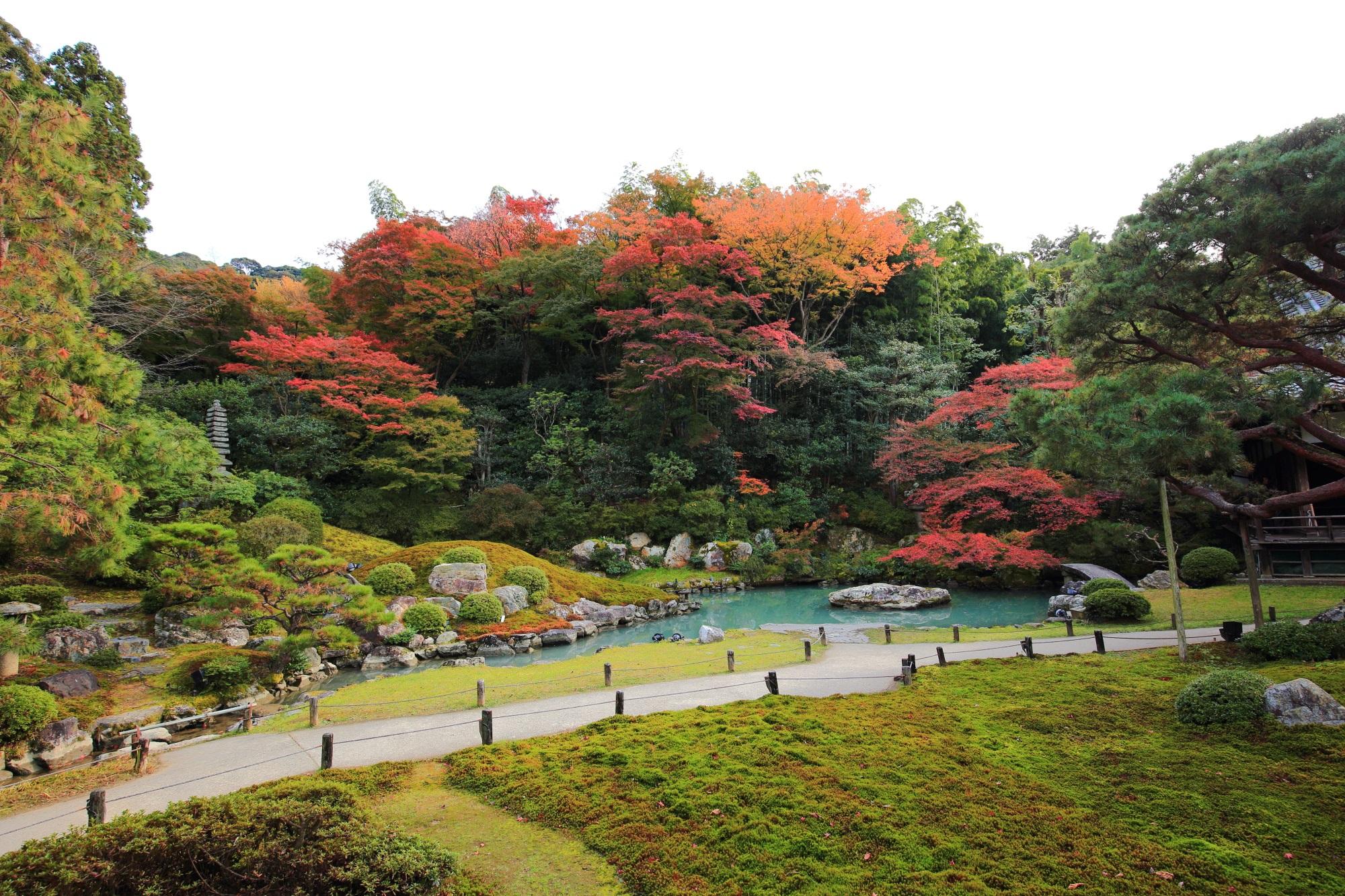 青蓮院の相阿弥の庭の見ごろの色とりどりの紅葉と綺麗な苔