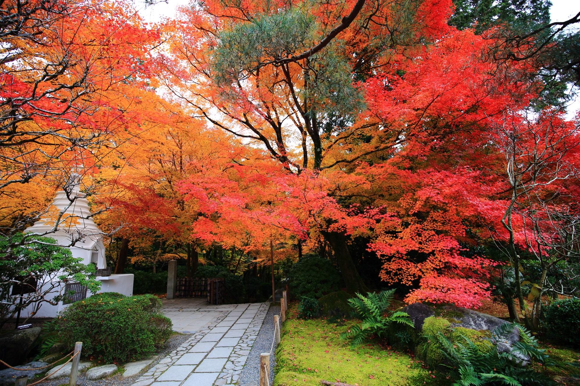 龍安寺のパゴダの紅葉