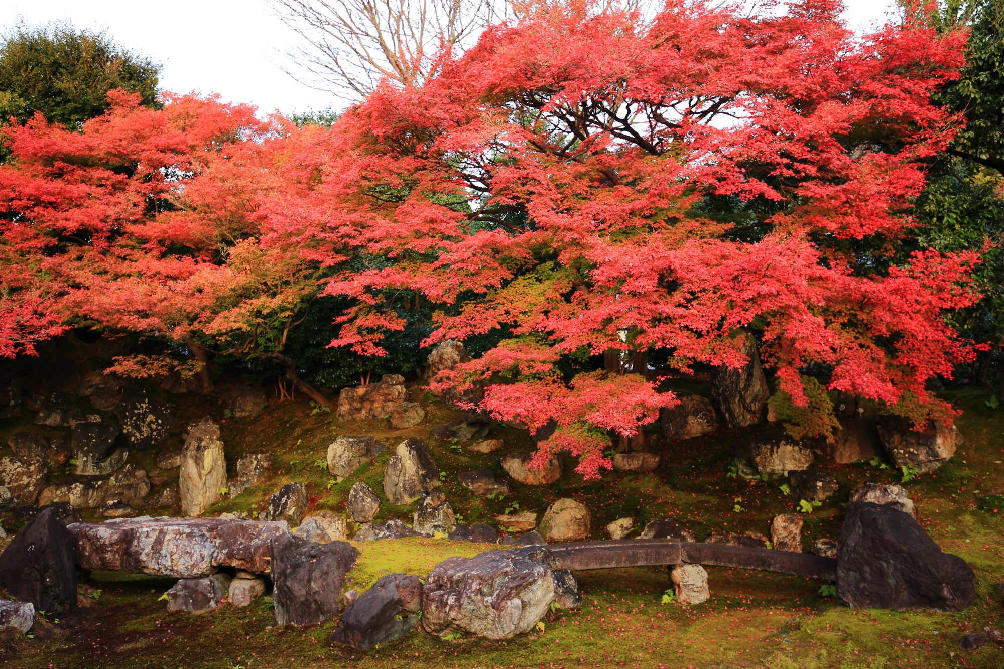 Entoku-in Temple Kyoto autumn leaves 見ごろ 北庭 秋 高台寺