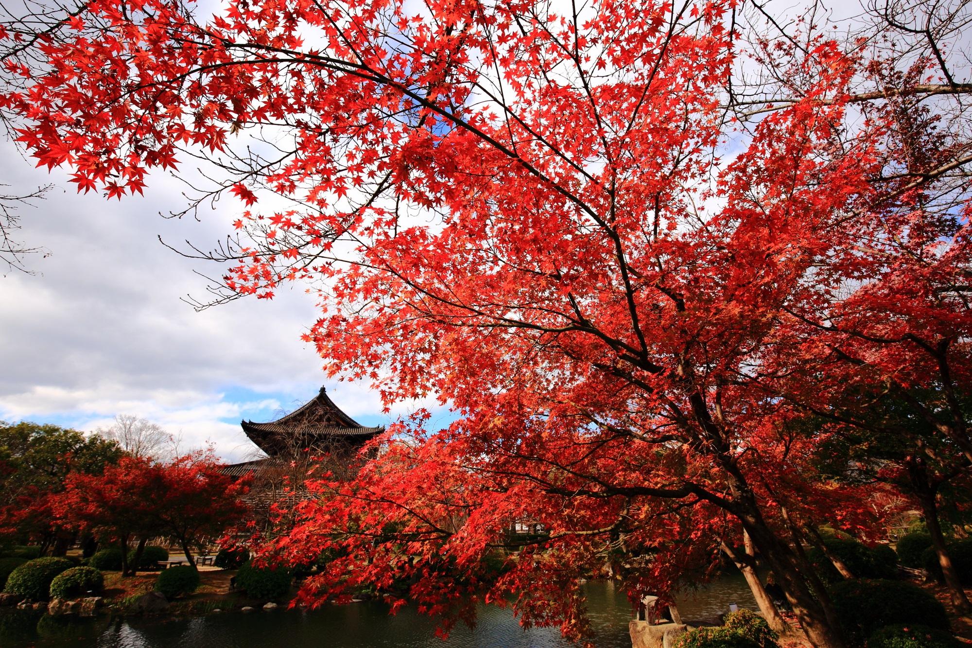 紅葉名所の教王護国寺の見ごろの綺麗な紅葉と金堂