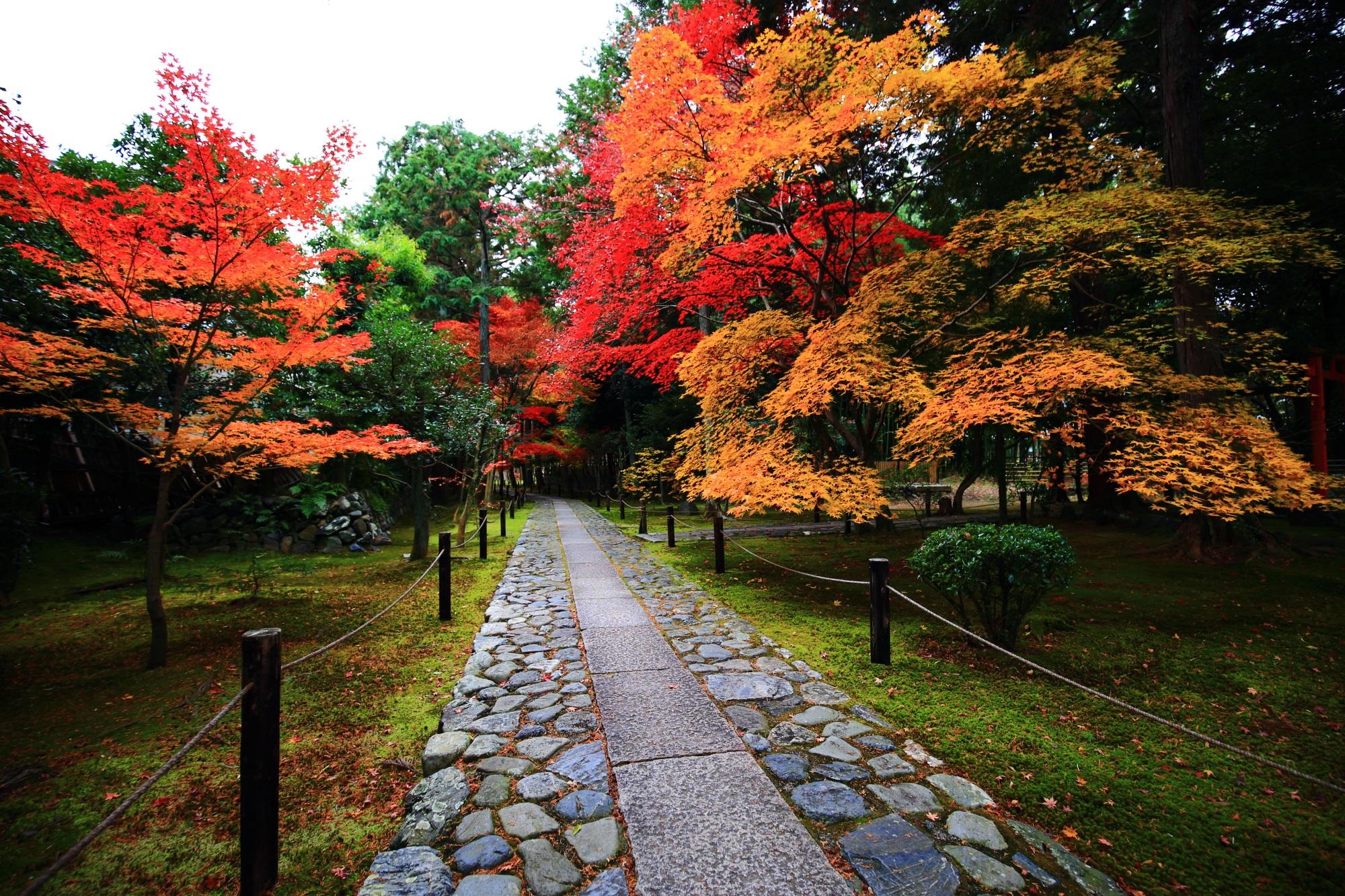 見ごろの色とりどりの紅葉につつまれた嵐山の鹿王院の参道