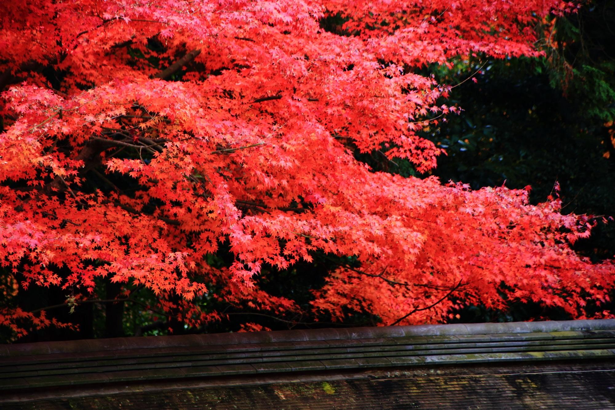 曇りや雨の日が美しい石庭の紅葉