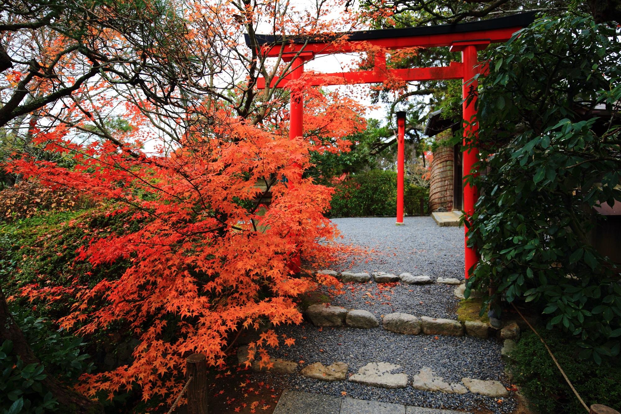龍安寺の弁天島の紅葉