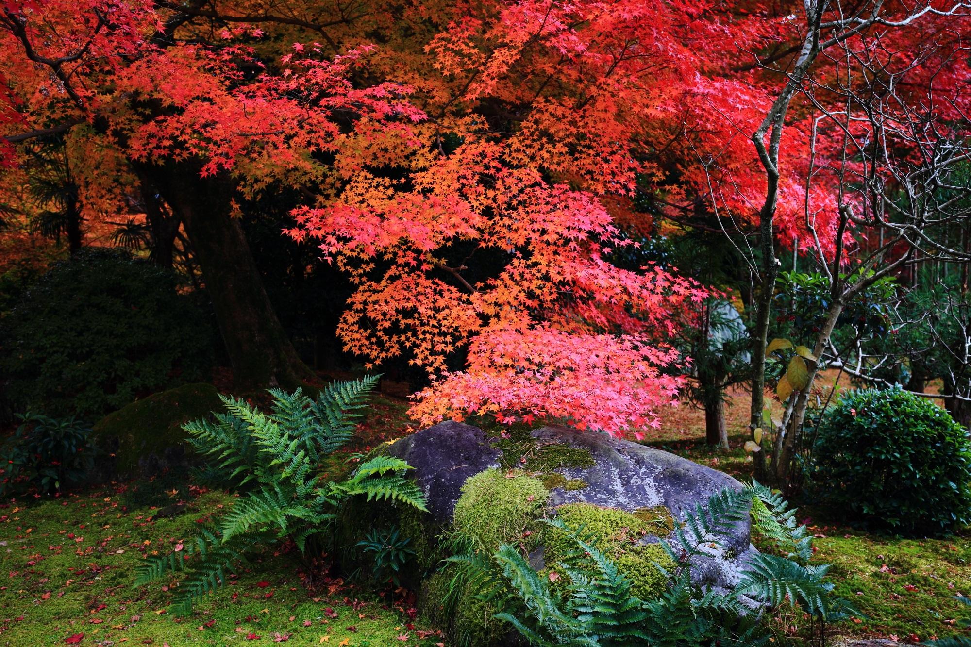 苔庭のような場所の見事な紅葉