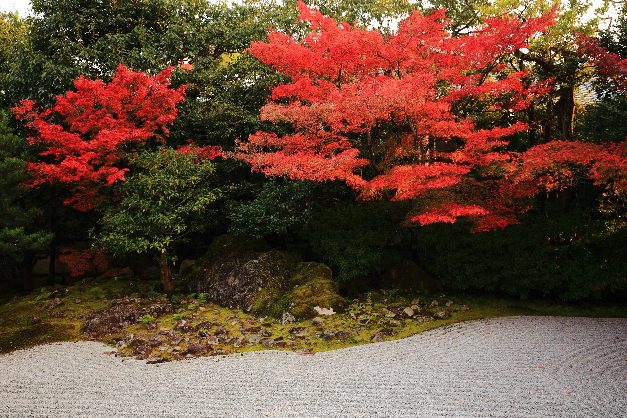 高台寺圓徳院の南庭の白砂と見ごろの赤い紅葉