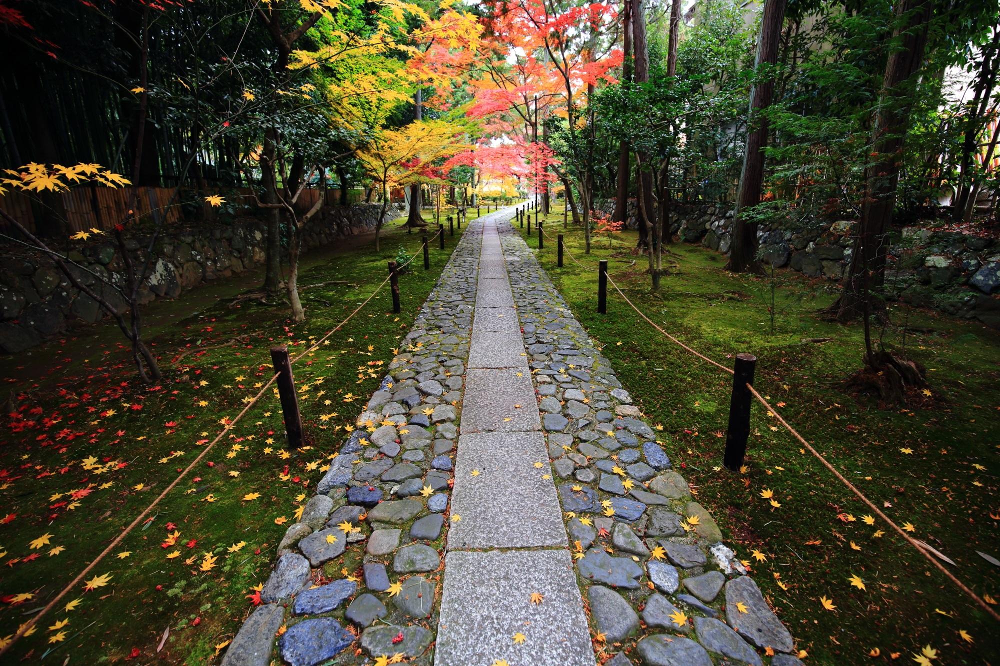 紅葉の穴場の鹿王院の参道の美しい紅葉と散りもみじ