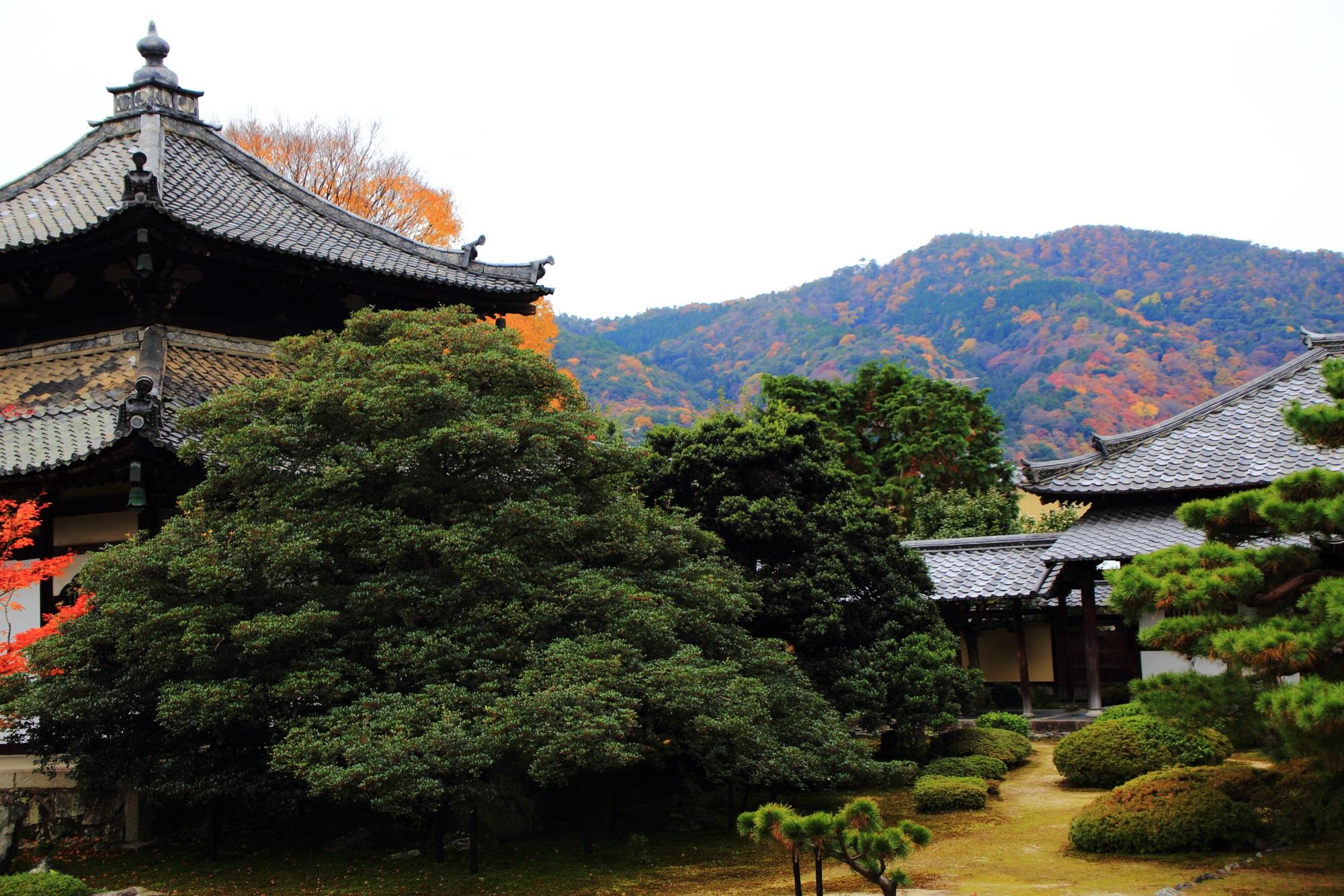 鹿王院の舎利殿と色づいた嵐山