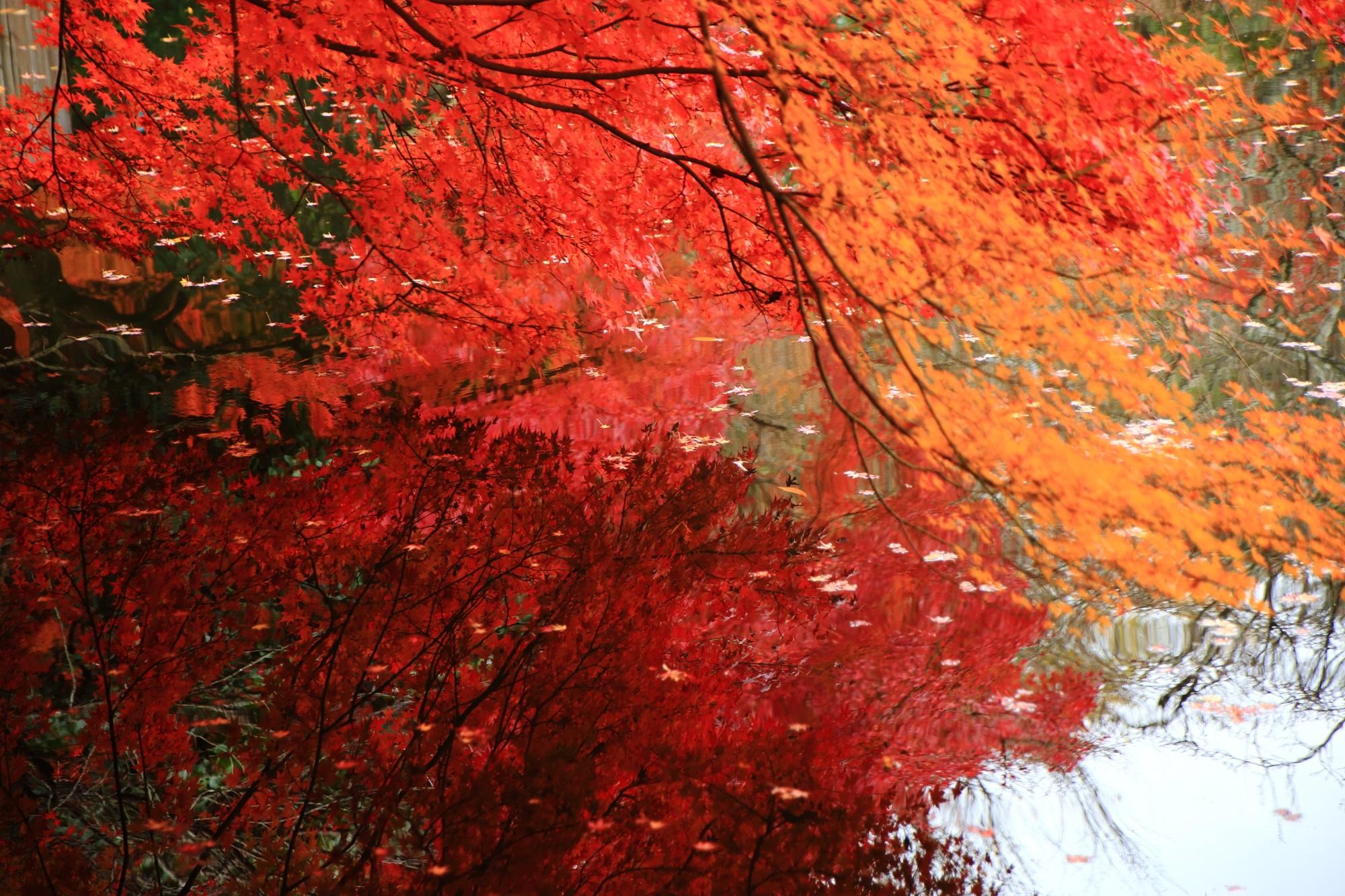 龍安寺の柔らかで優しい色合いの紅葉