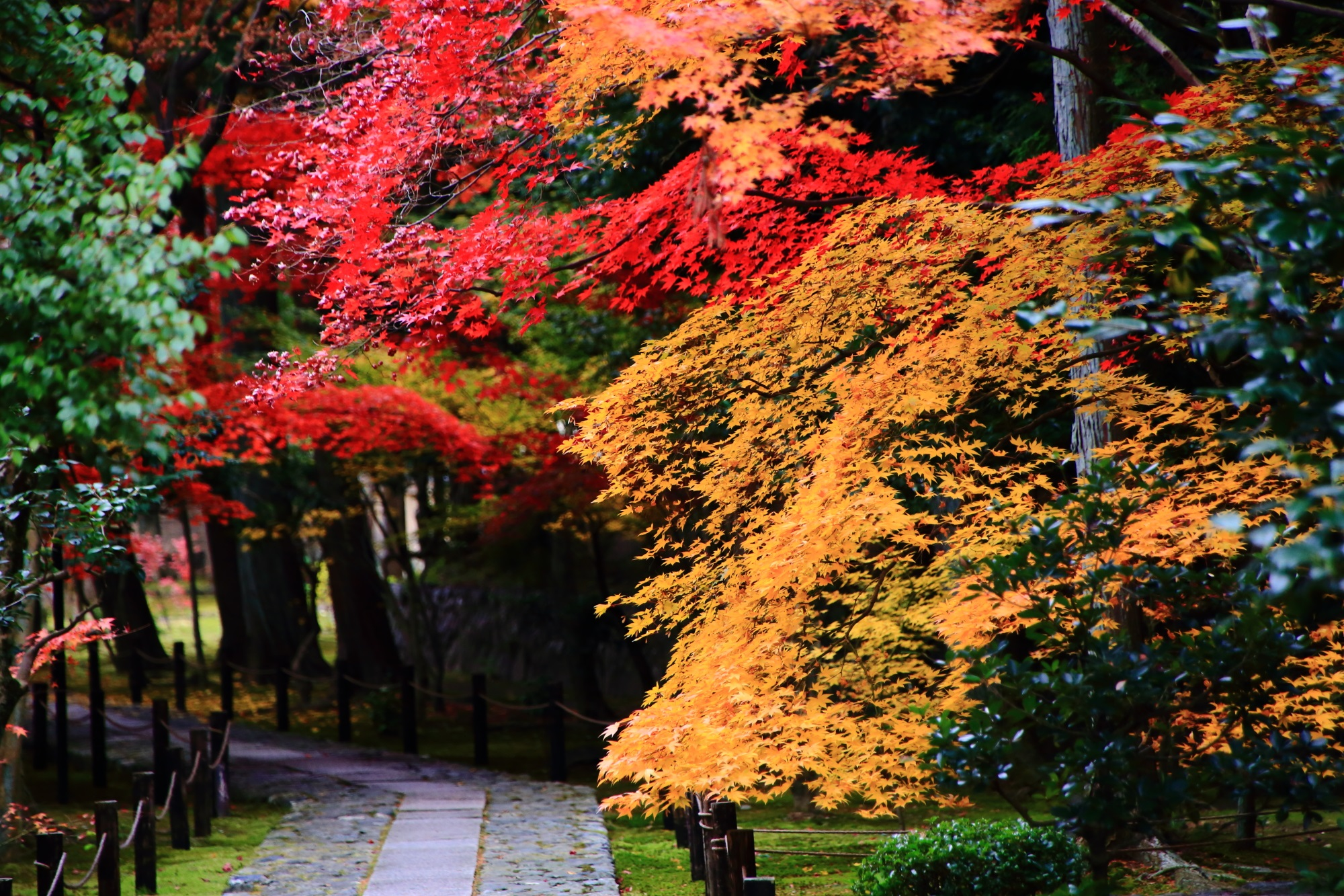 鮮やかな紅葉につつまれた鹿王院の参道