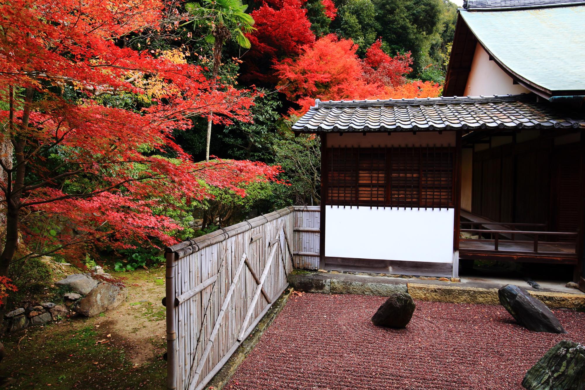 龍吟庵(りょうぎんあん)の方丈東庭の不離の庭の優美な紅葉