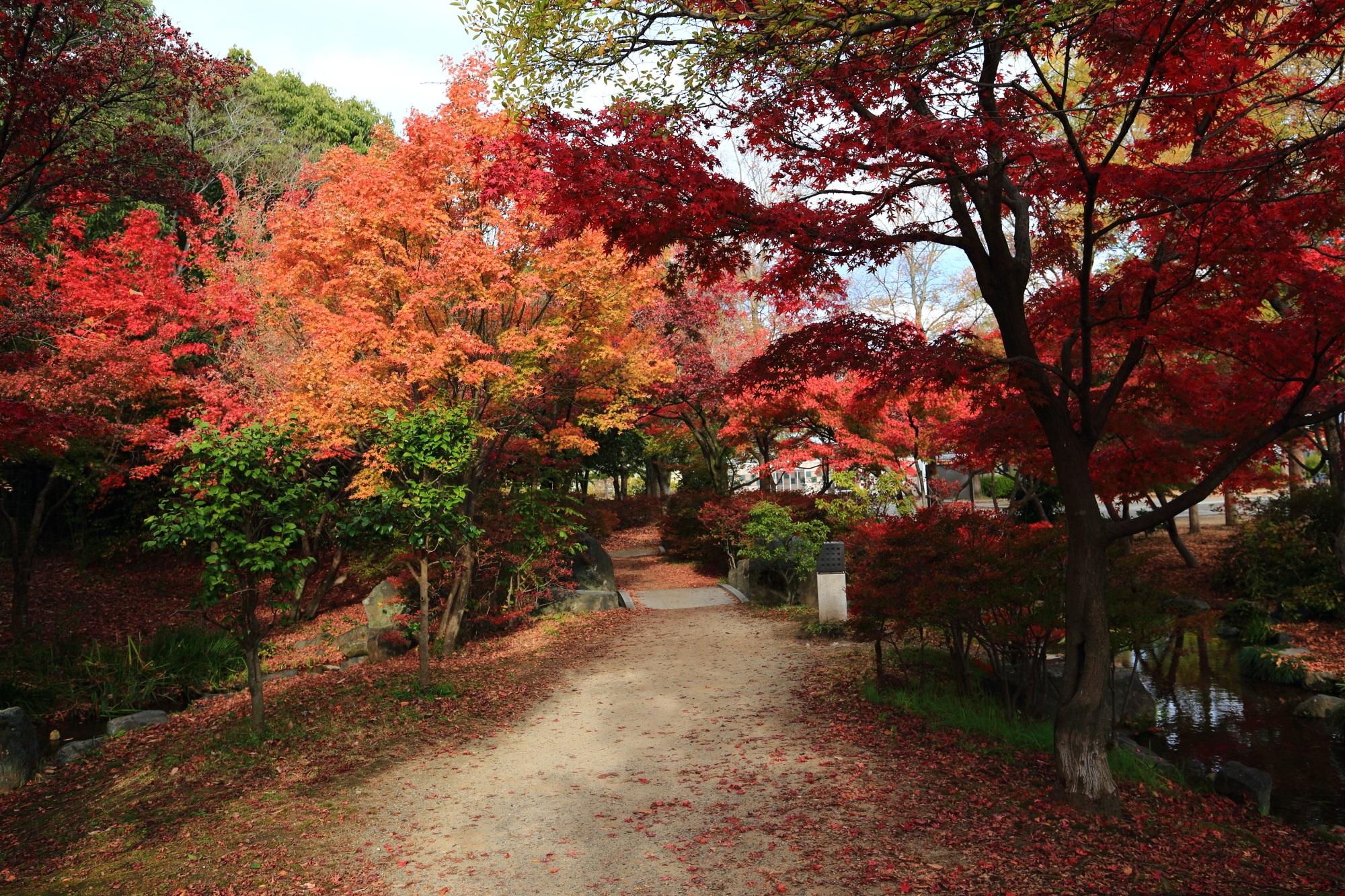 京都の憩いの場の梅小路公園の綺麗な見ごろの紅葉