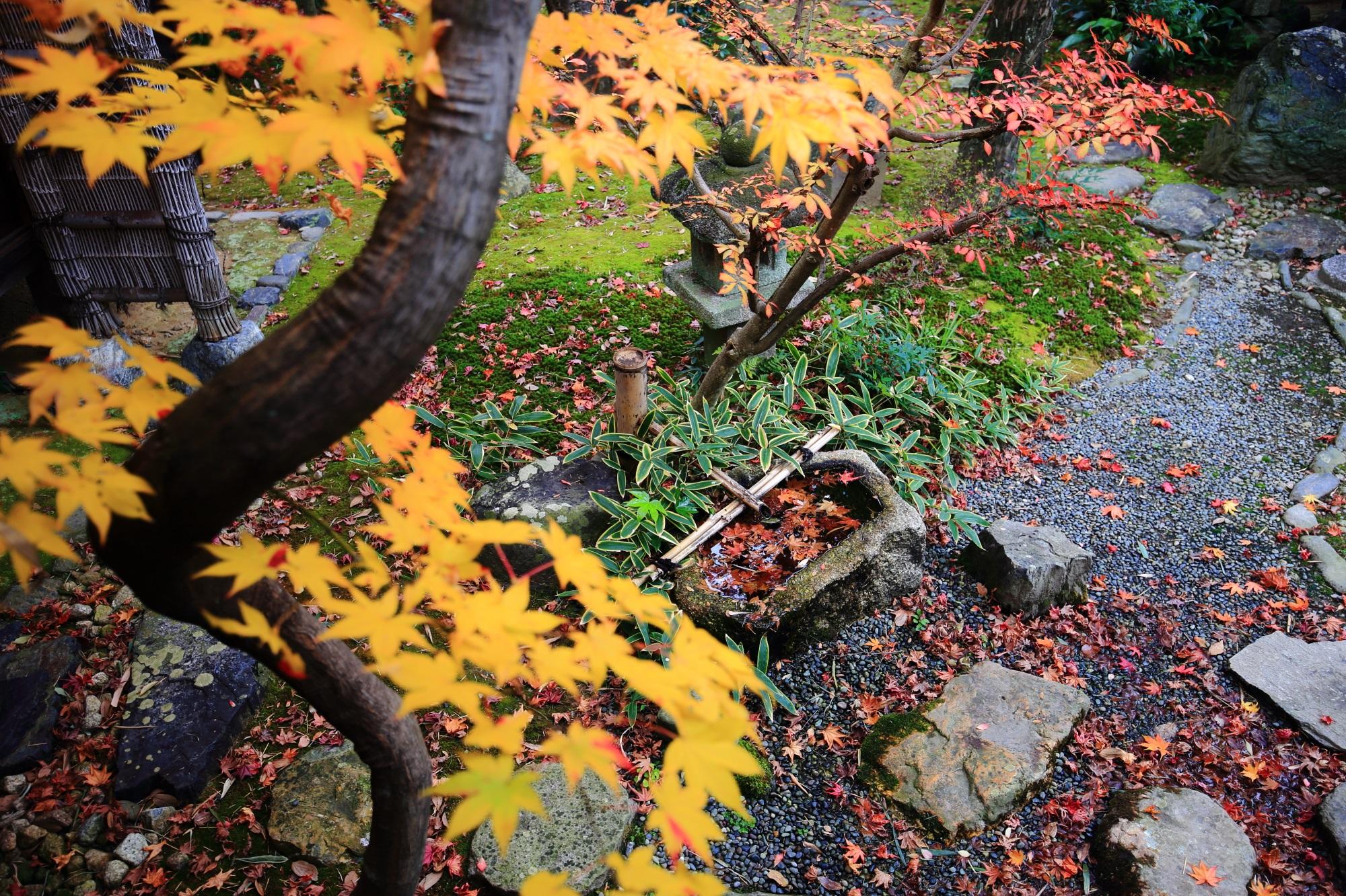 嵐山の鹿王院の茶庭の紅葉