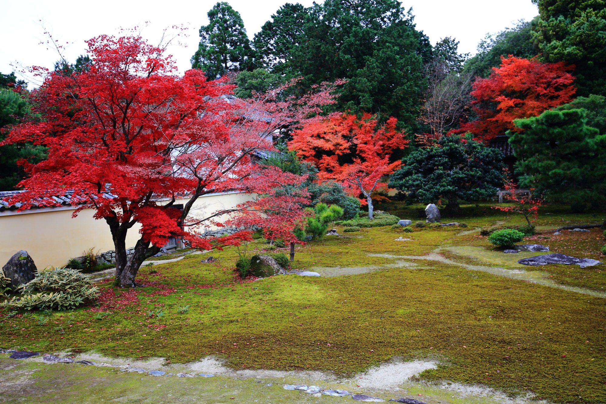 Rokuo-in Temple Kyoto colored leaves 見ごろ 鮮やか 本庭 もみじ