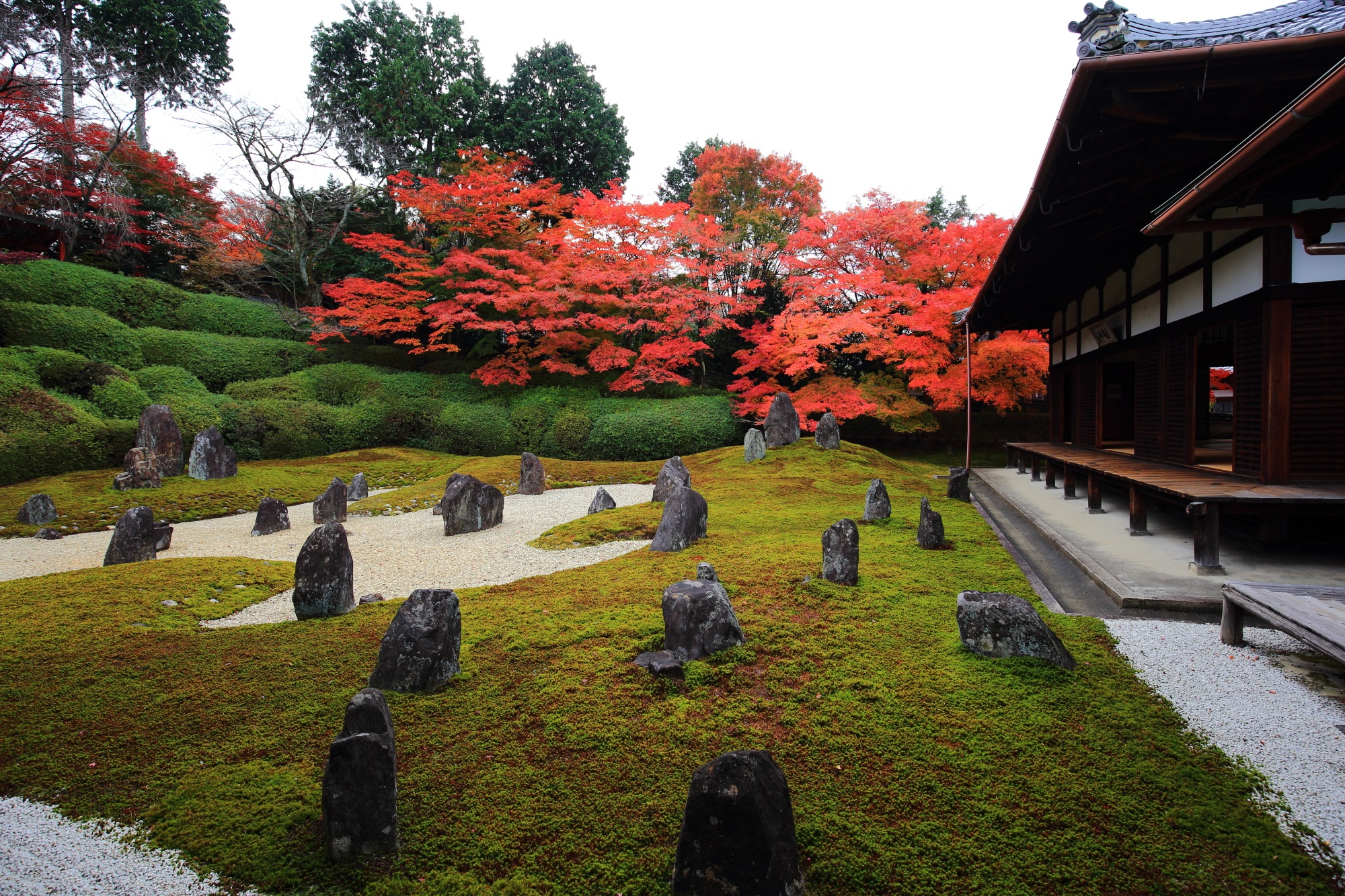 Hashin-Garden Komyo-in Temple Kyoto autumn leaves 見ごろ 鮮やか 岩 苔 白砂