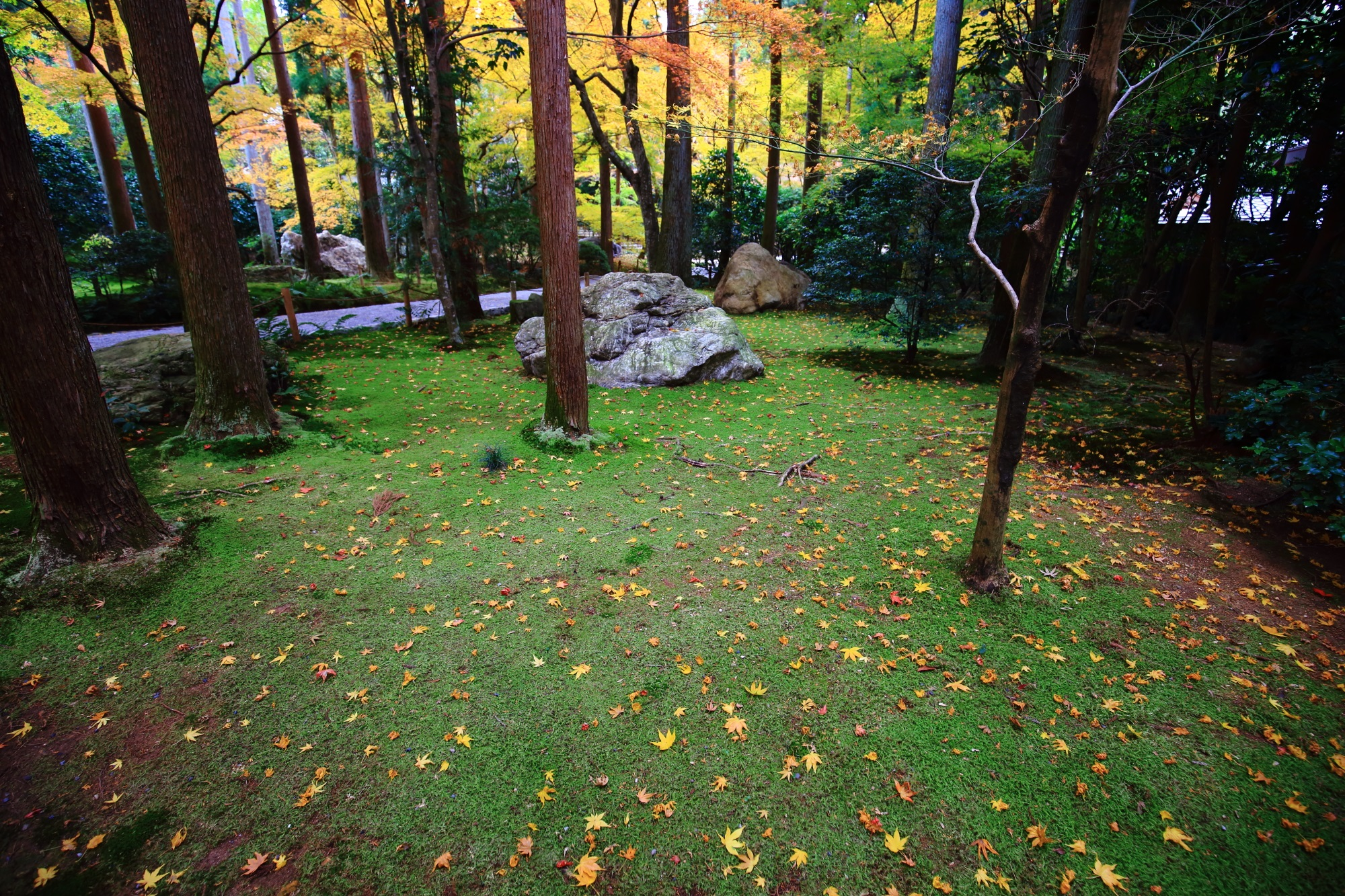 龍安寺参道の苔と散りもみじ