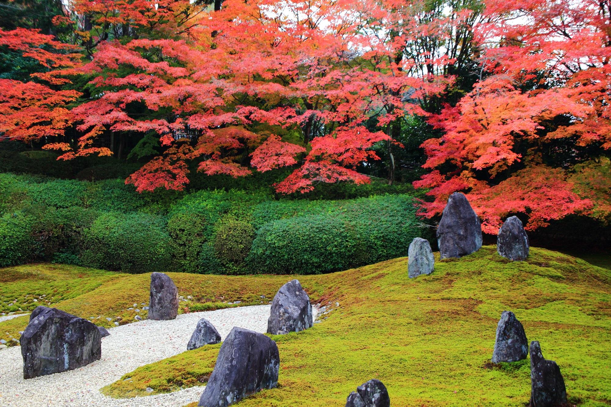 鮮やかな紅葉に彩られる風情ある日本庭園
