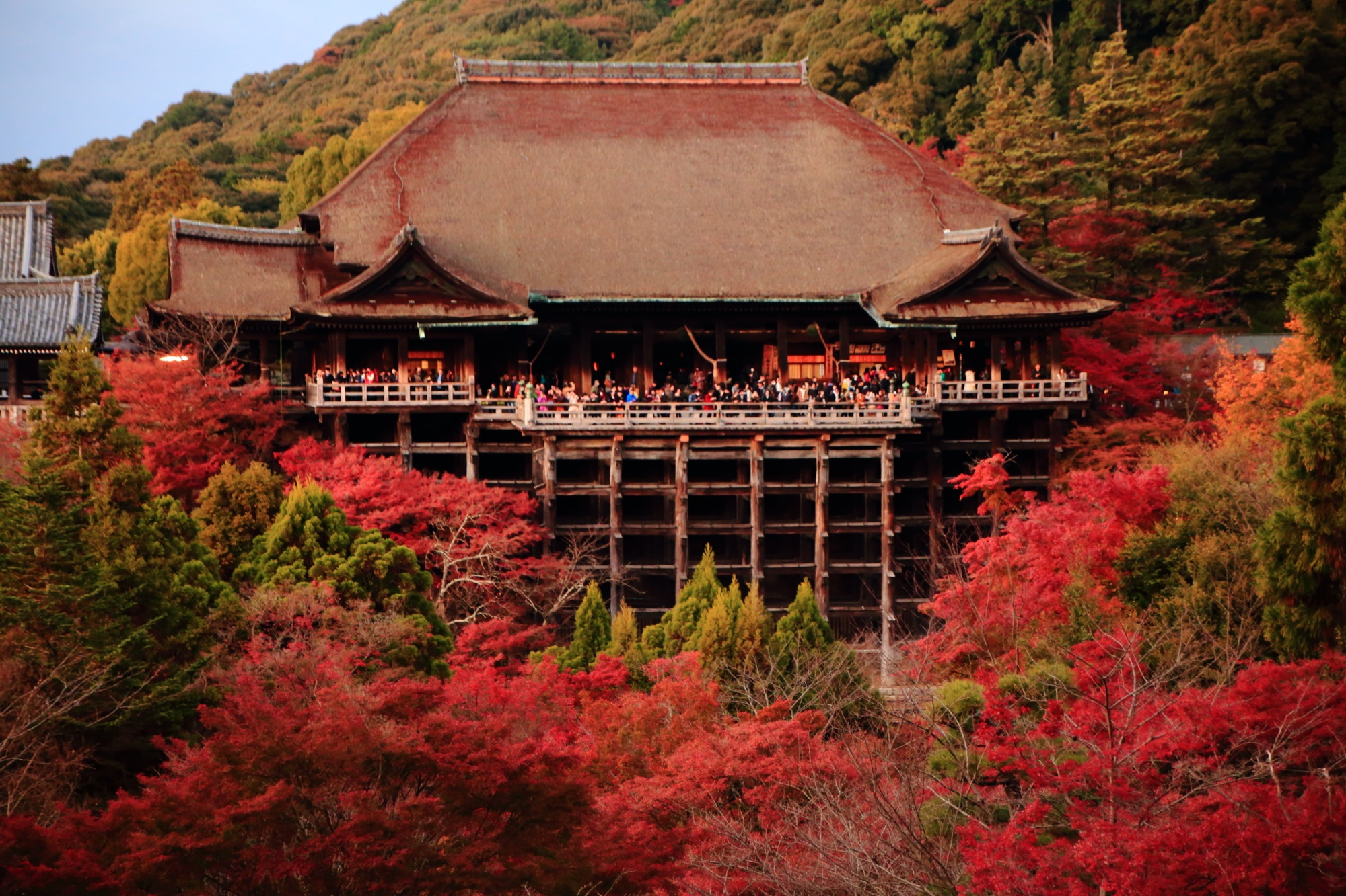 Kyoto Kiyomizudera-Temple colored leaves 清水の舞台 紅葉 見ごろ 秋