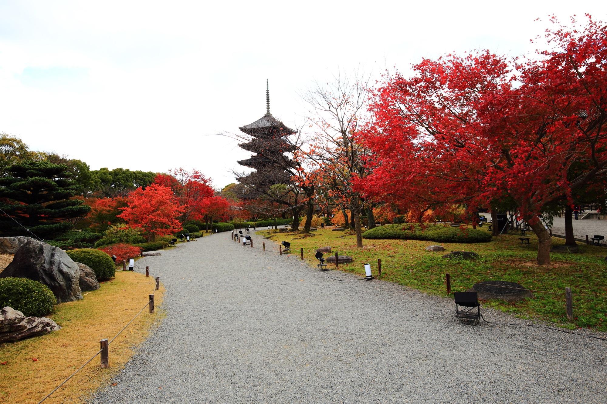 もみじの名所の東寺の見ごろの紅葉と五重塔