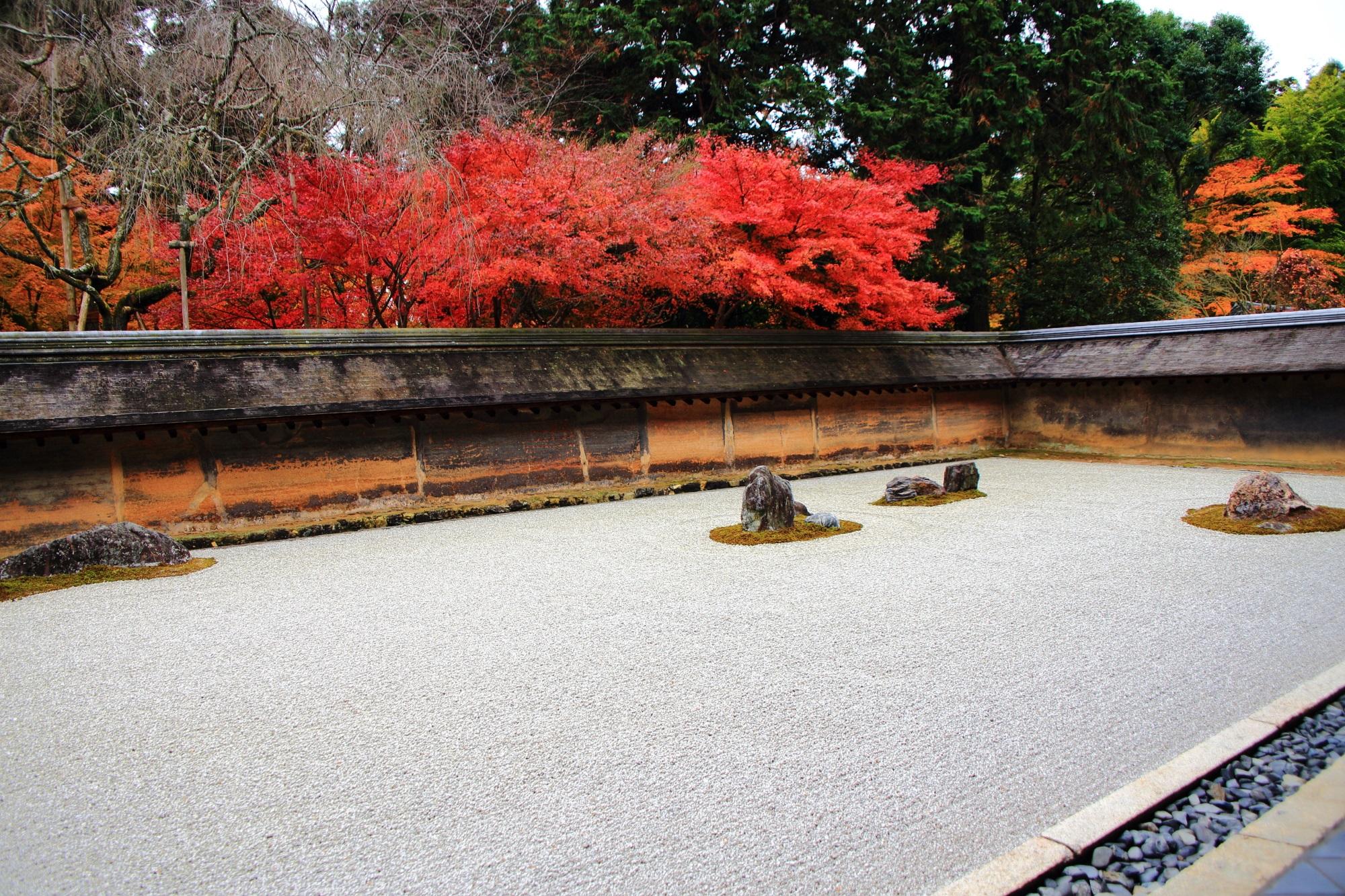 龍安寺の有名な石庭の鮮やかな紅葉