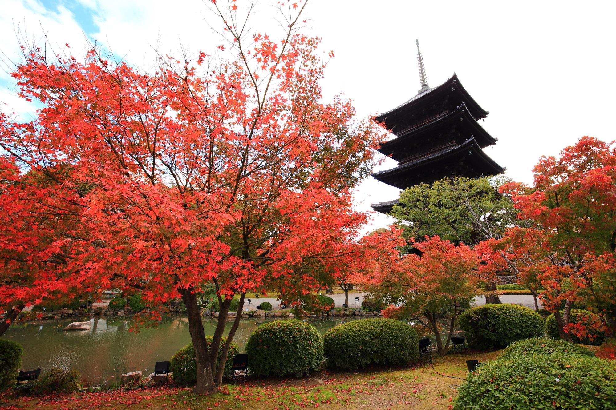 教王護国寺(東寺)の五重塔と見ごろの綺麗な紅葉
